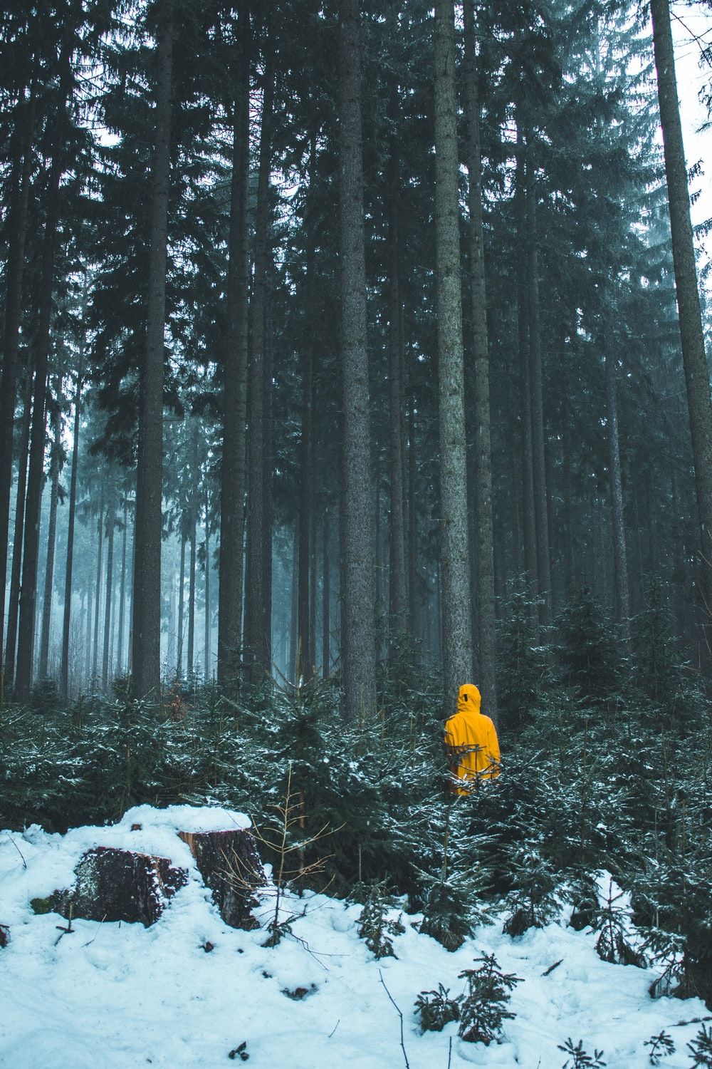 person in yellow hoodie in woods during daytime