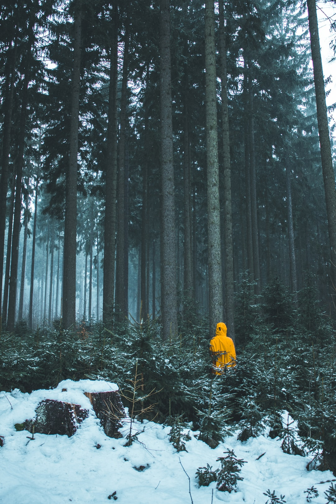 Alone In The Forest Pictures   Download Free Images on ...