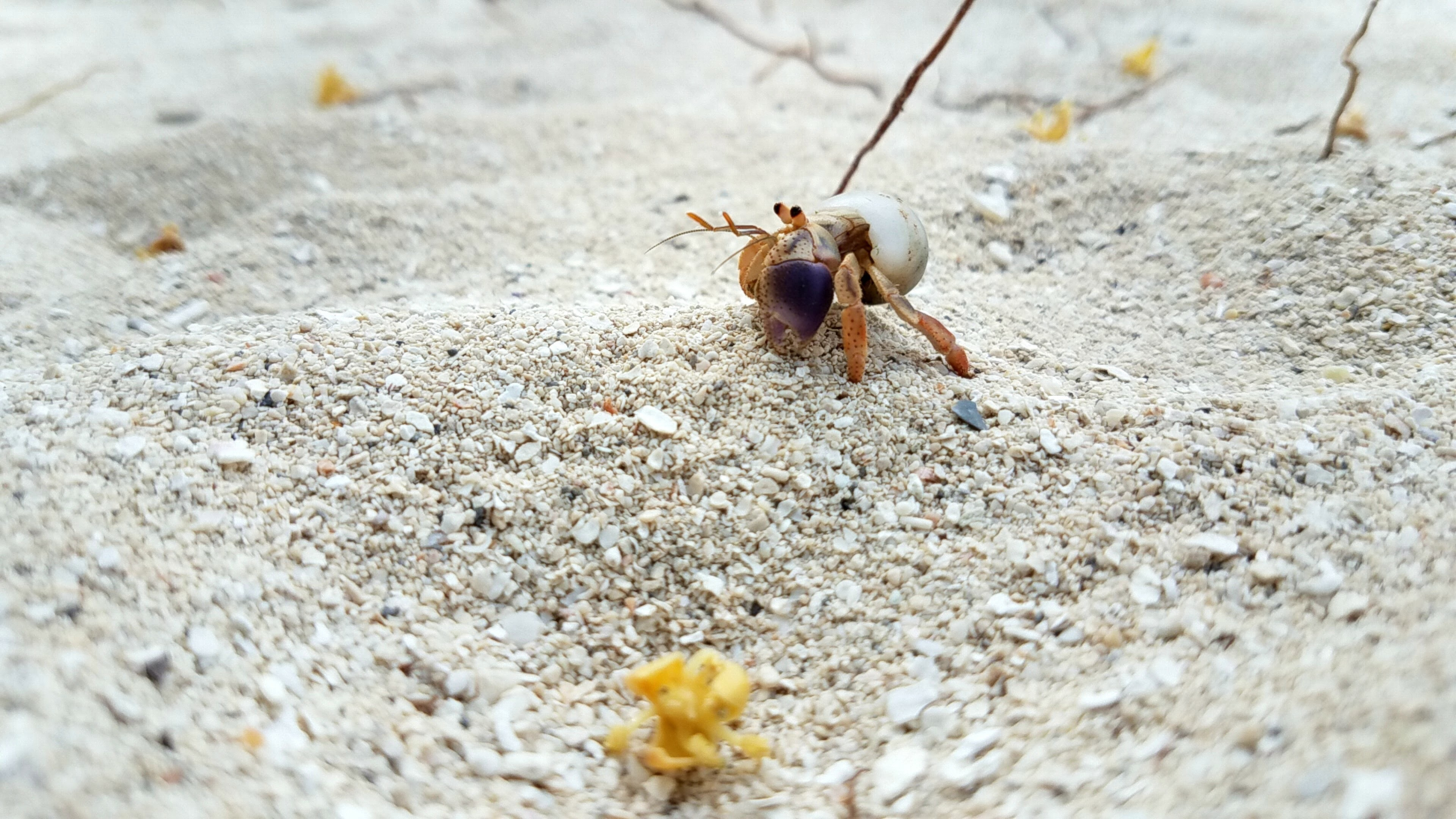 gray and brown hermit crab on gray sand