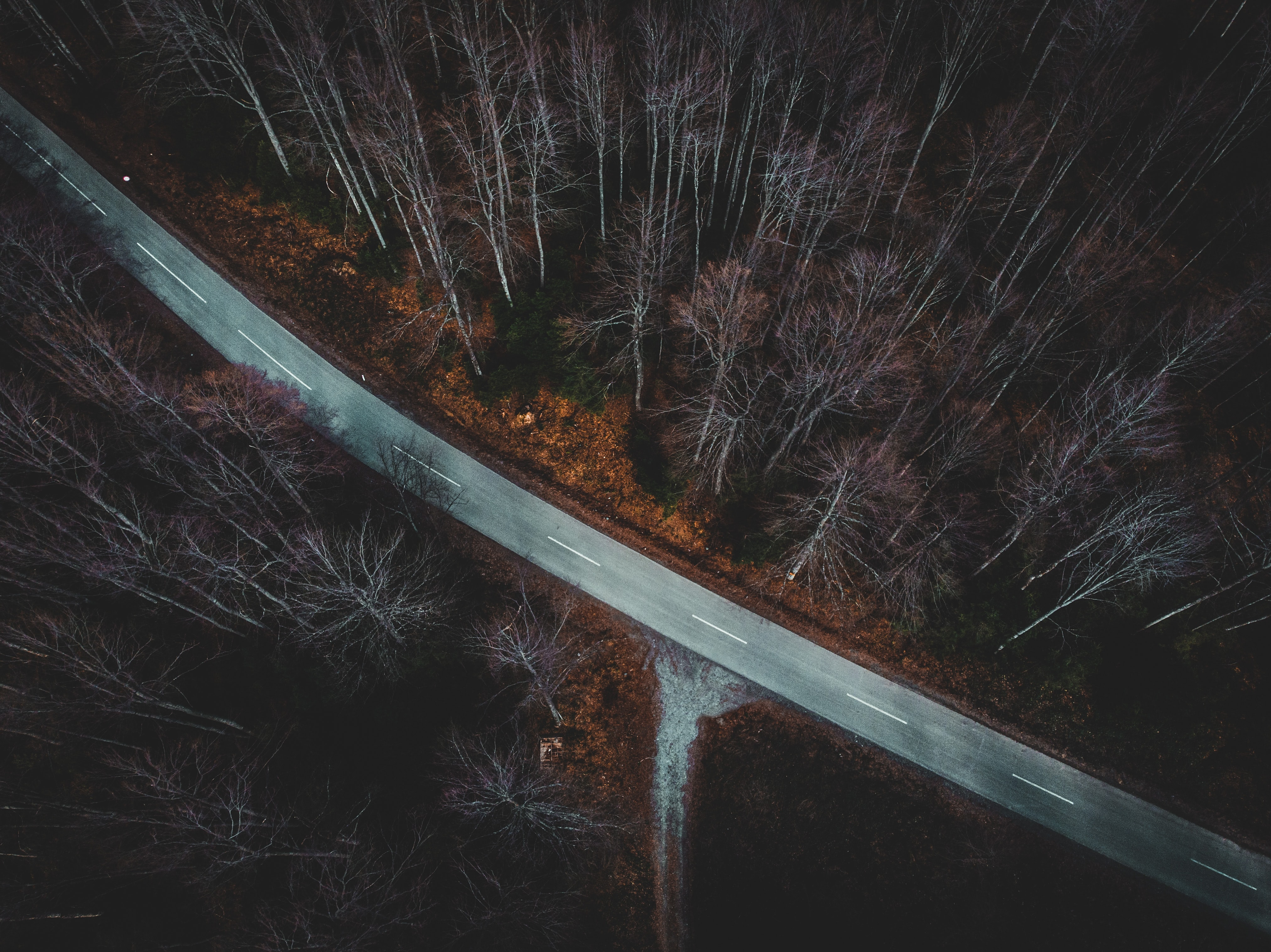 aerial view photography of road and trees