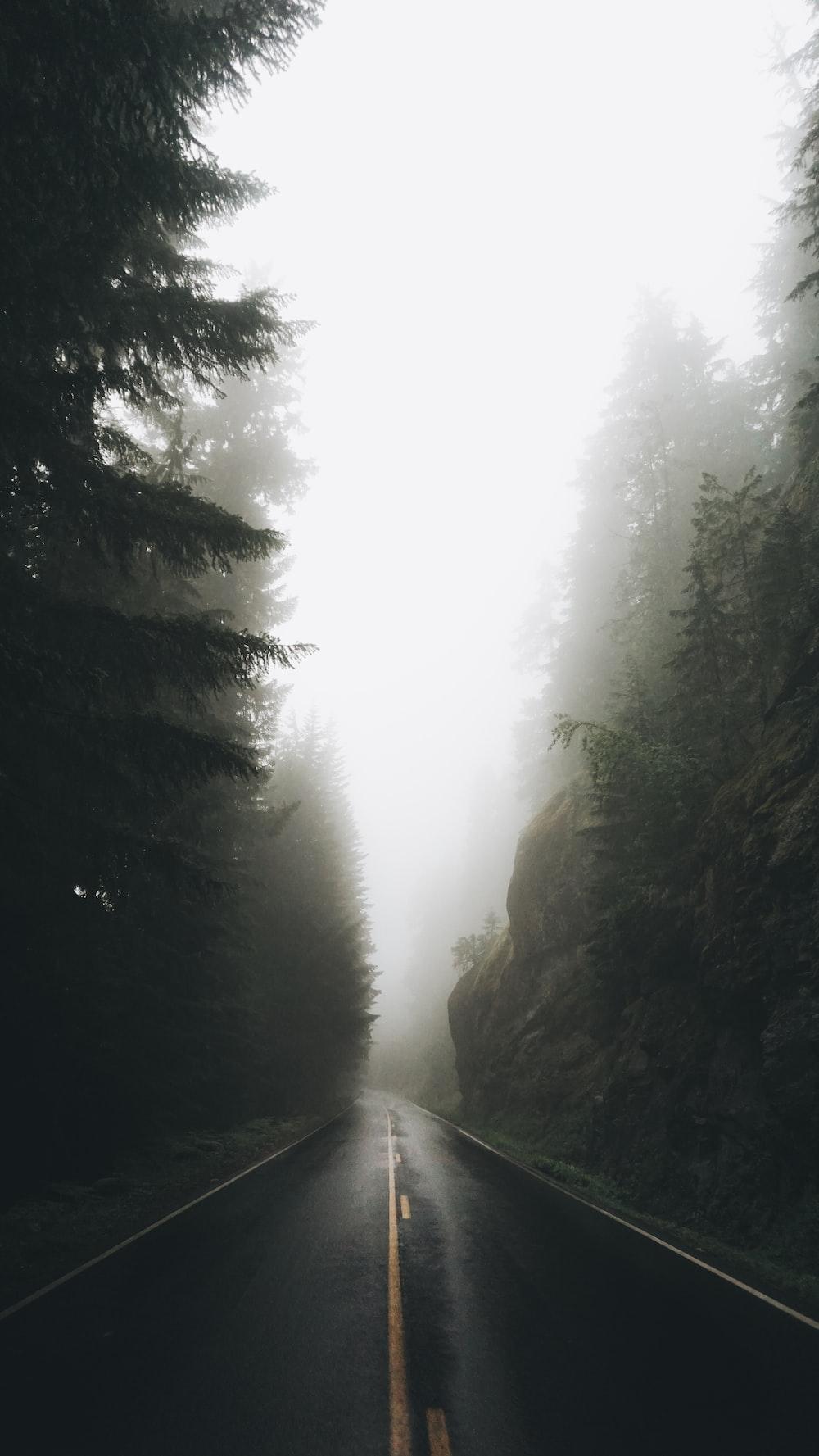 gray asphalt road near trees