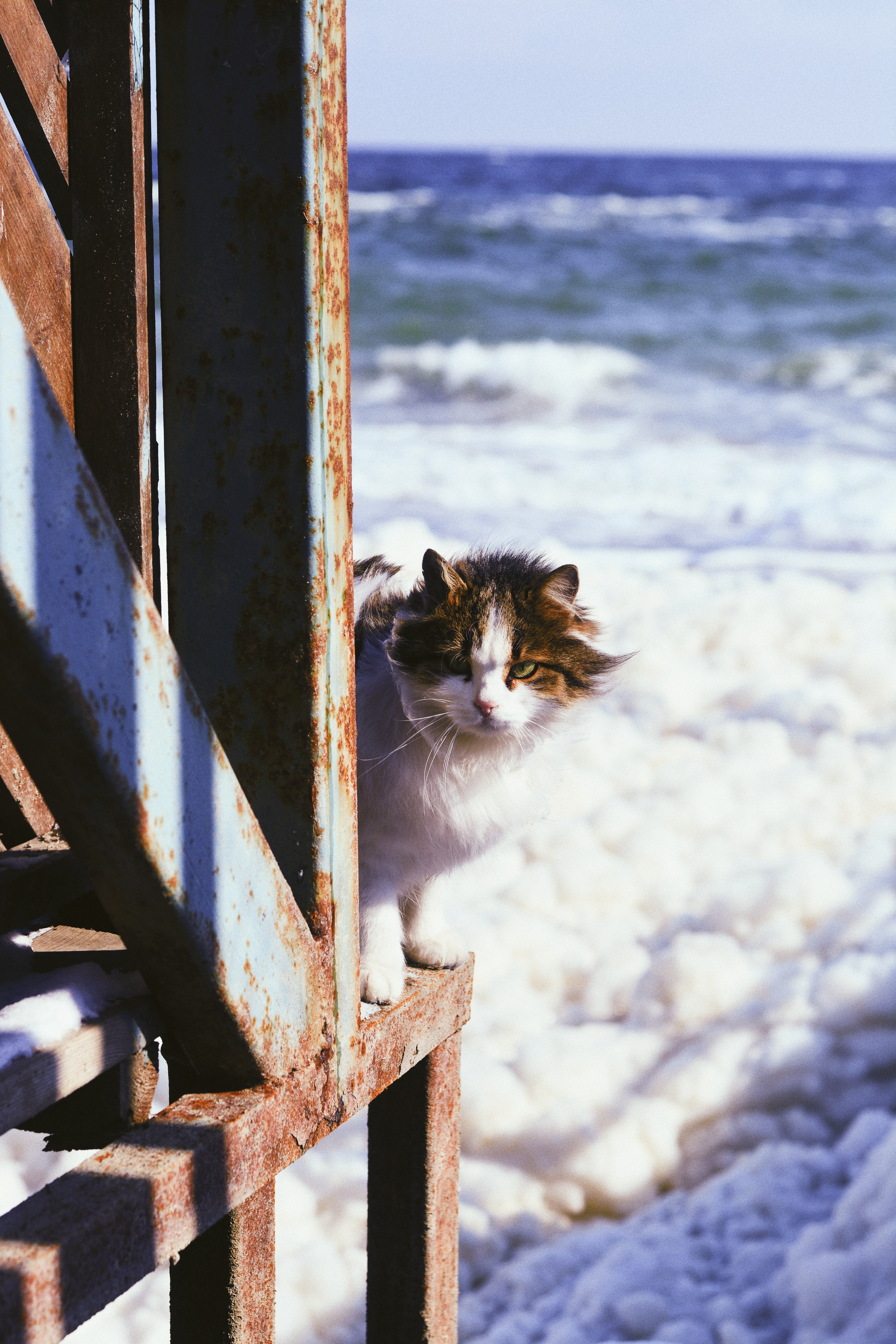 white and black tabby cat standing on brown metal stand