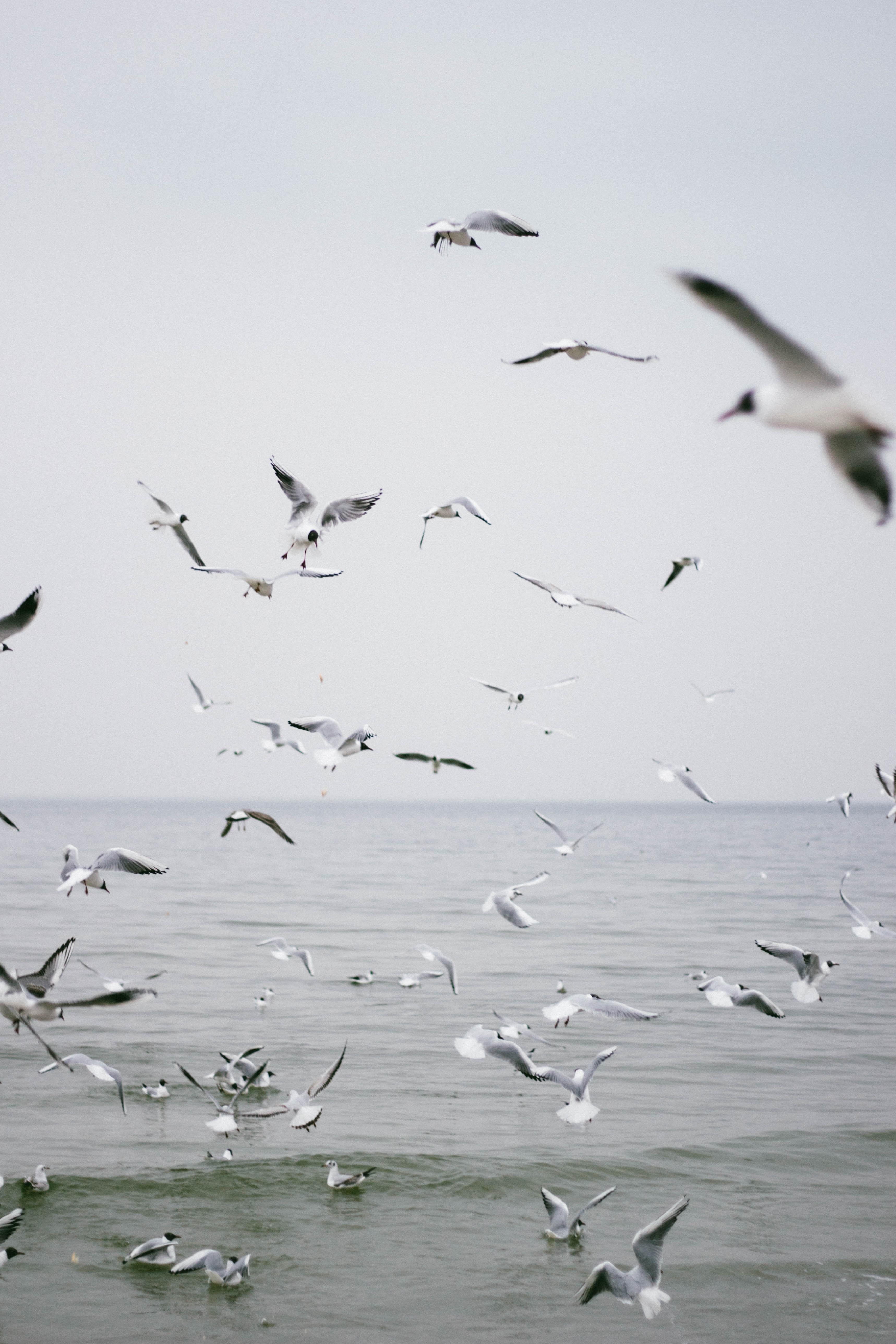 flock of birds flying on midair