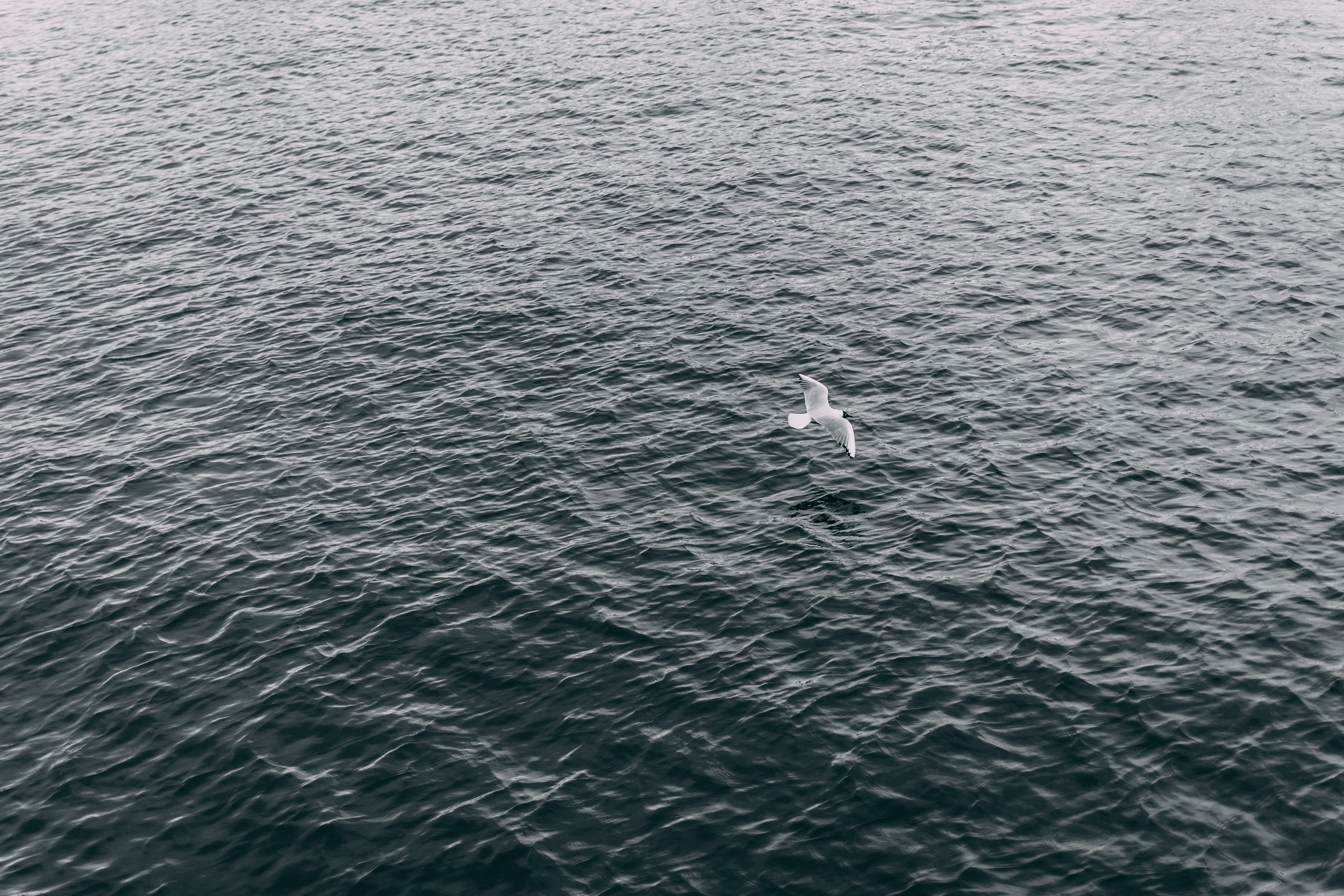 aerial photography of white bird flying over body of water at daytime