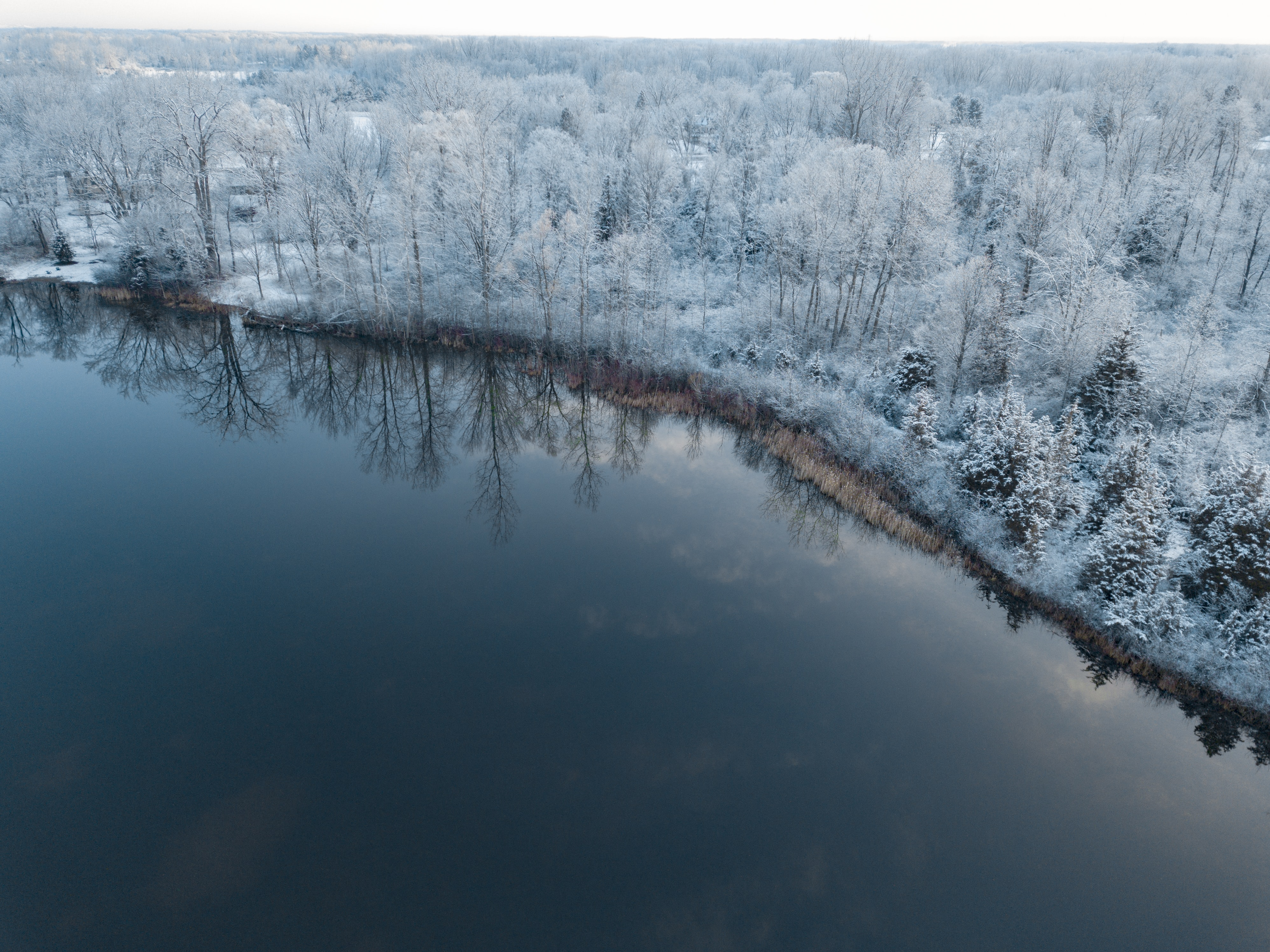 trees covered by snow near body of water