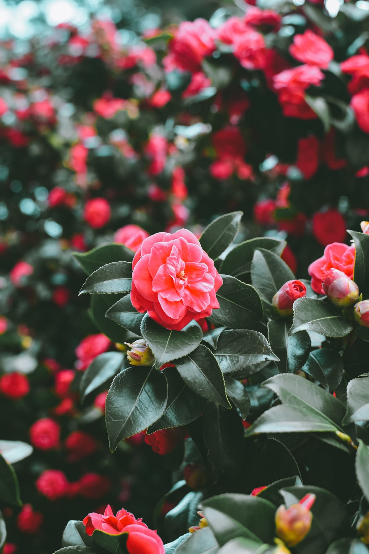 tilt shift photo red petaled flower