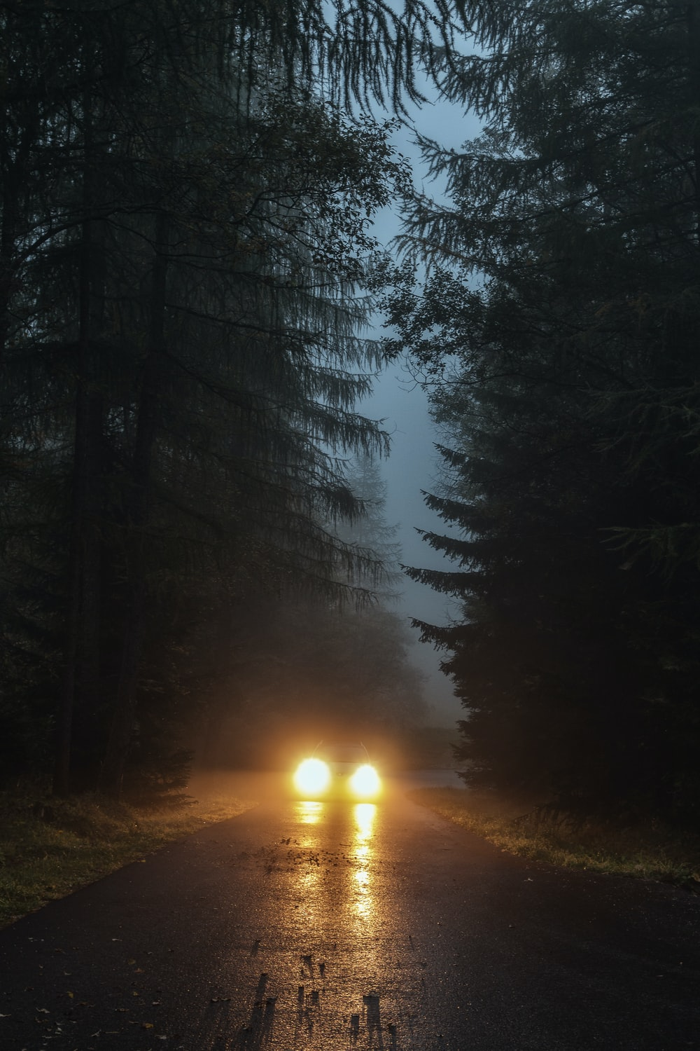 car driving in foggy forest during nighttime