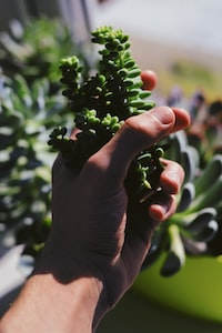 person holding green leafed plants