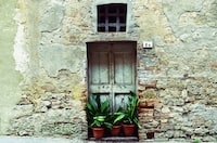 green plants in front of gray wooden door