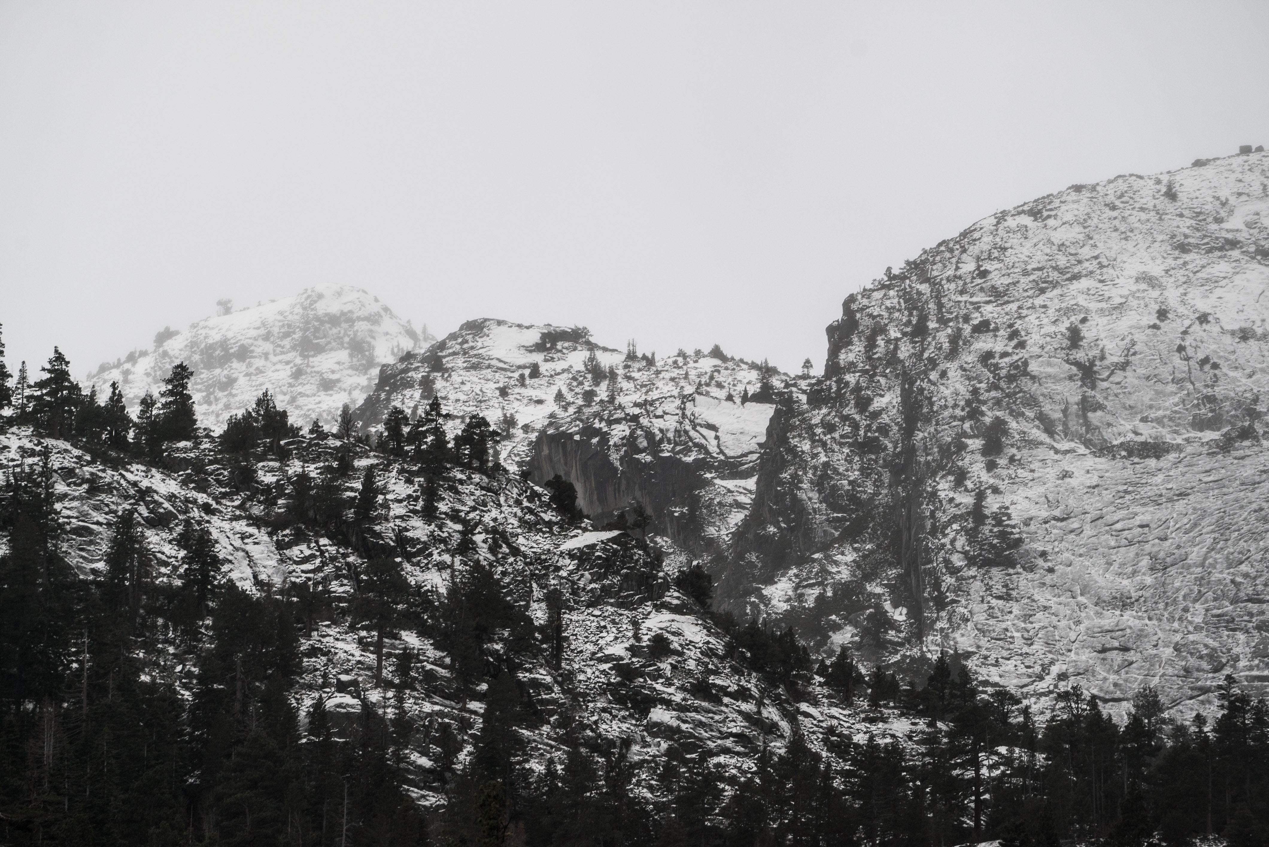 grayscale photo of pine trees and mountain