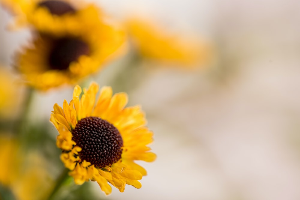 Flowers yellow pictures download free images on unsplash selective focus photography of yellow petaled flower mightylinksfo