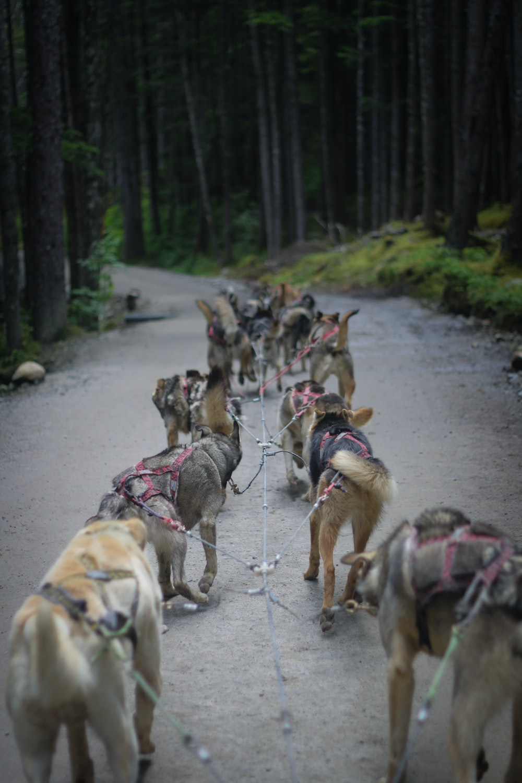 dog walking on road