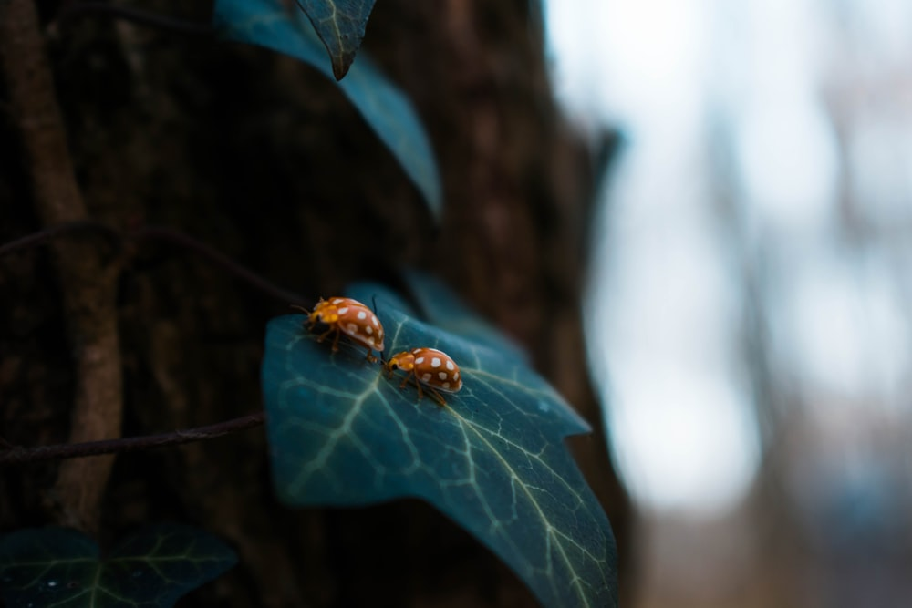 two brown bugs on green leaf