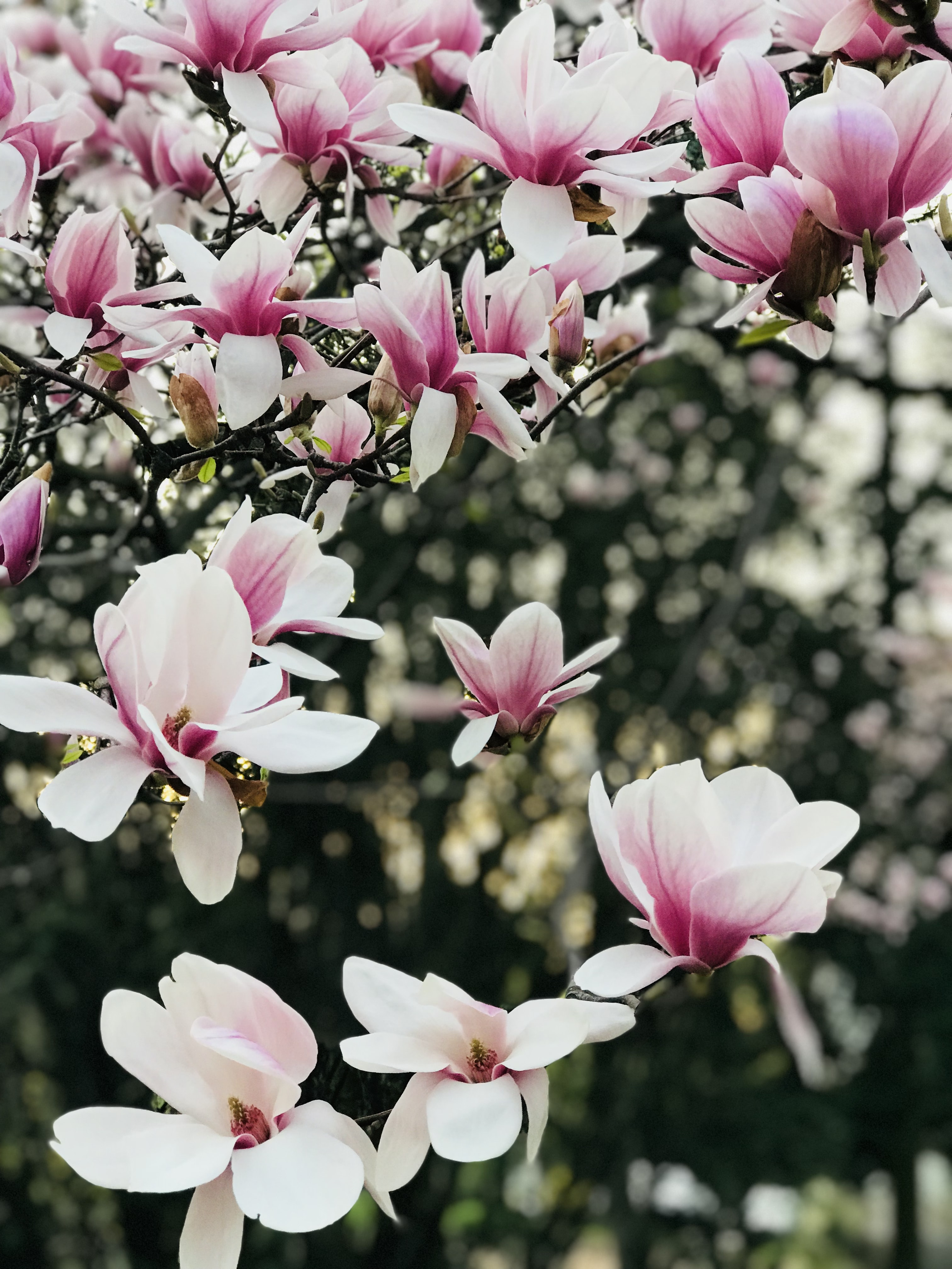 selective photo of pink flowering tree