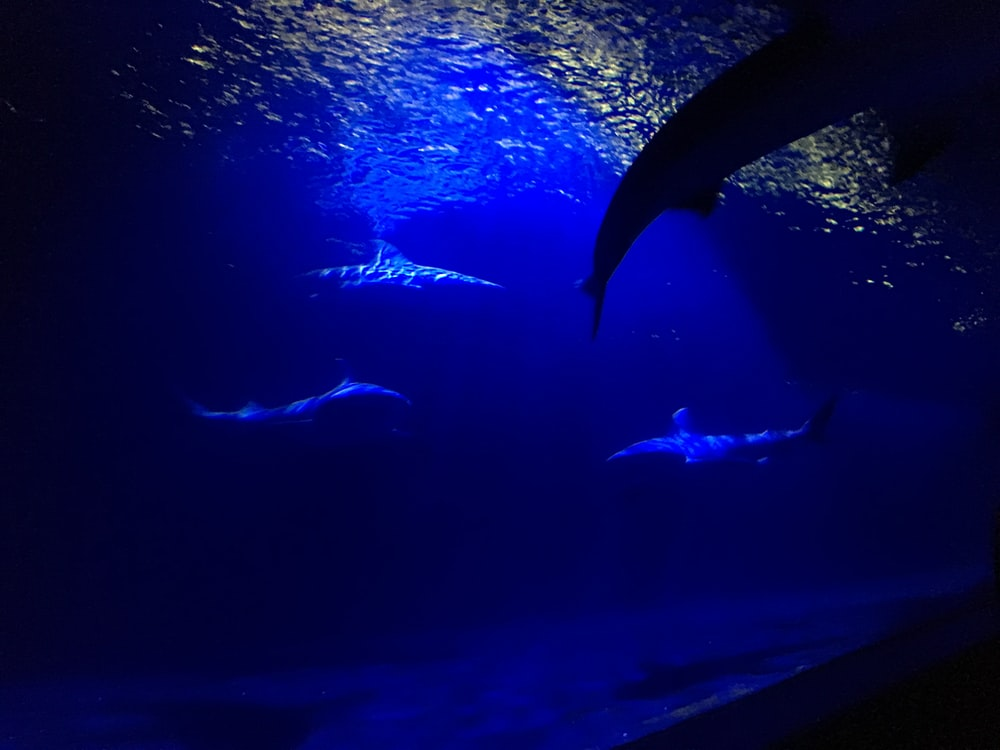 underwater photo of sharks