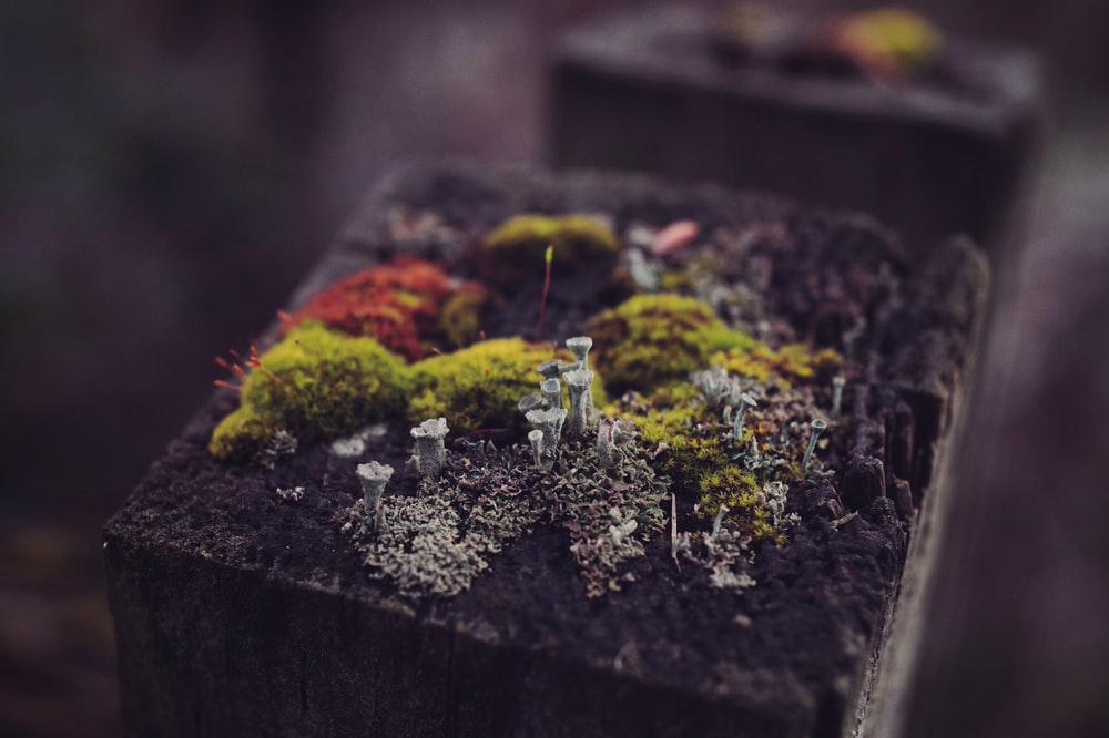 Garden Compost is Essential For Environment