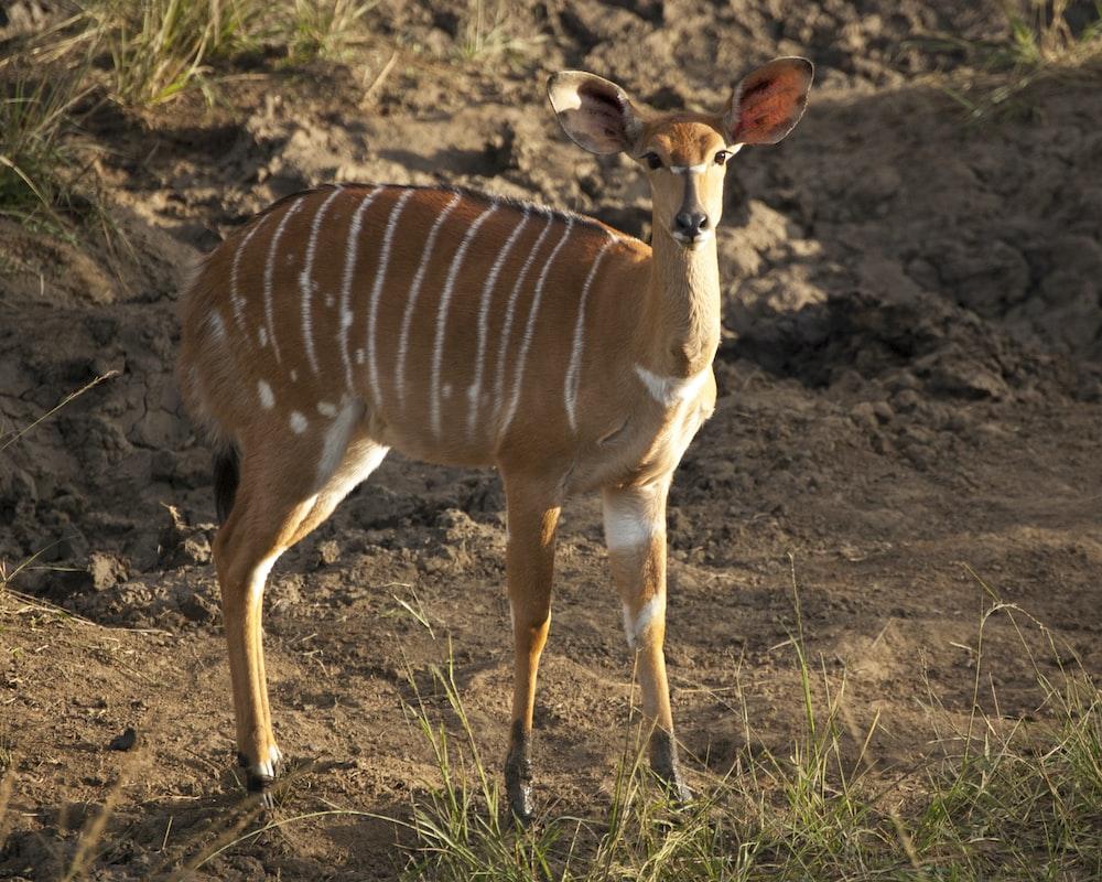 brown deer on land