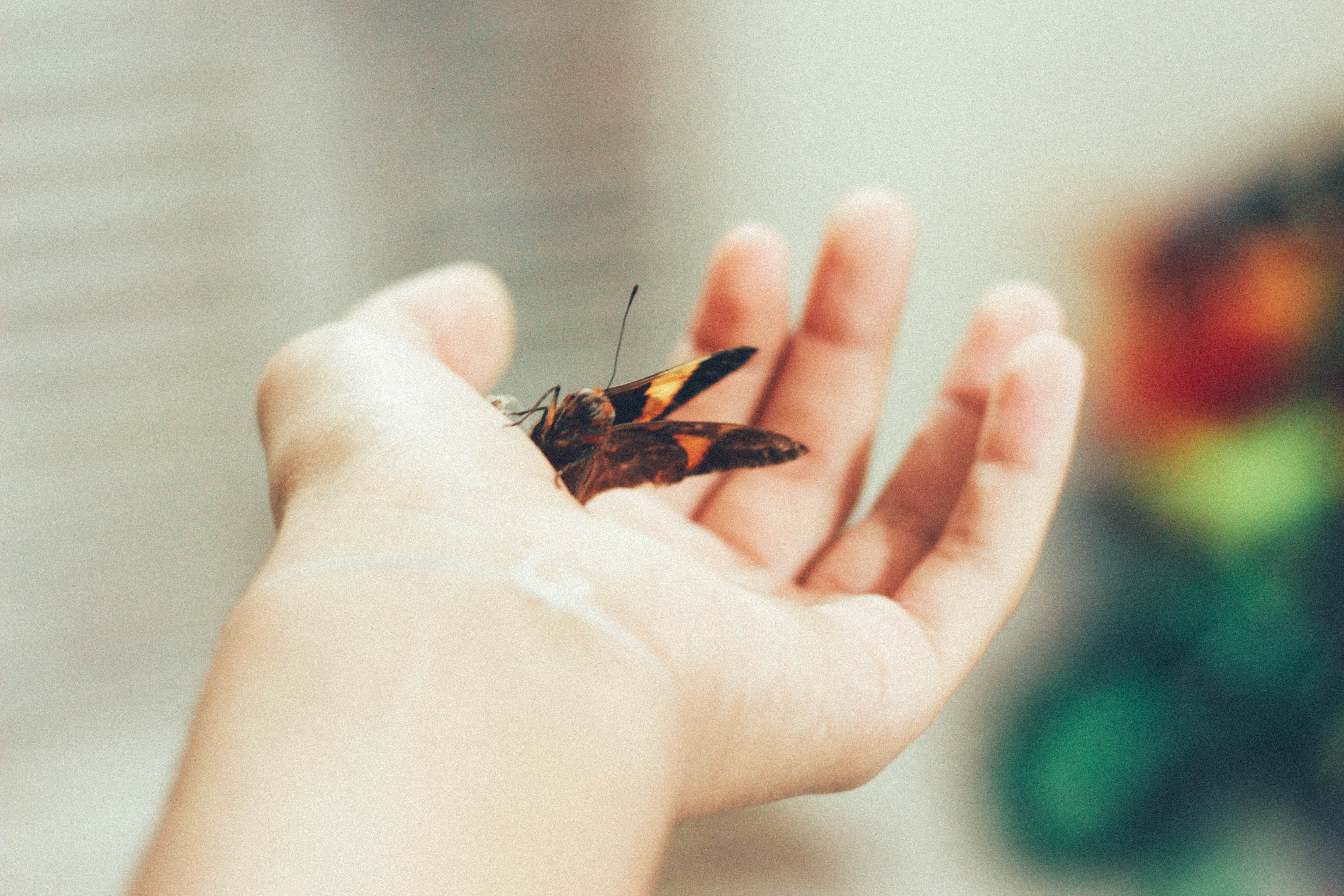 person holding brown butterfly