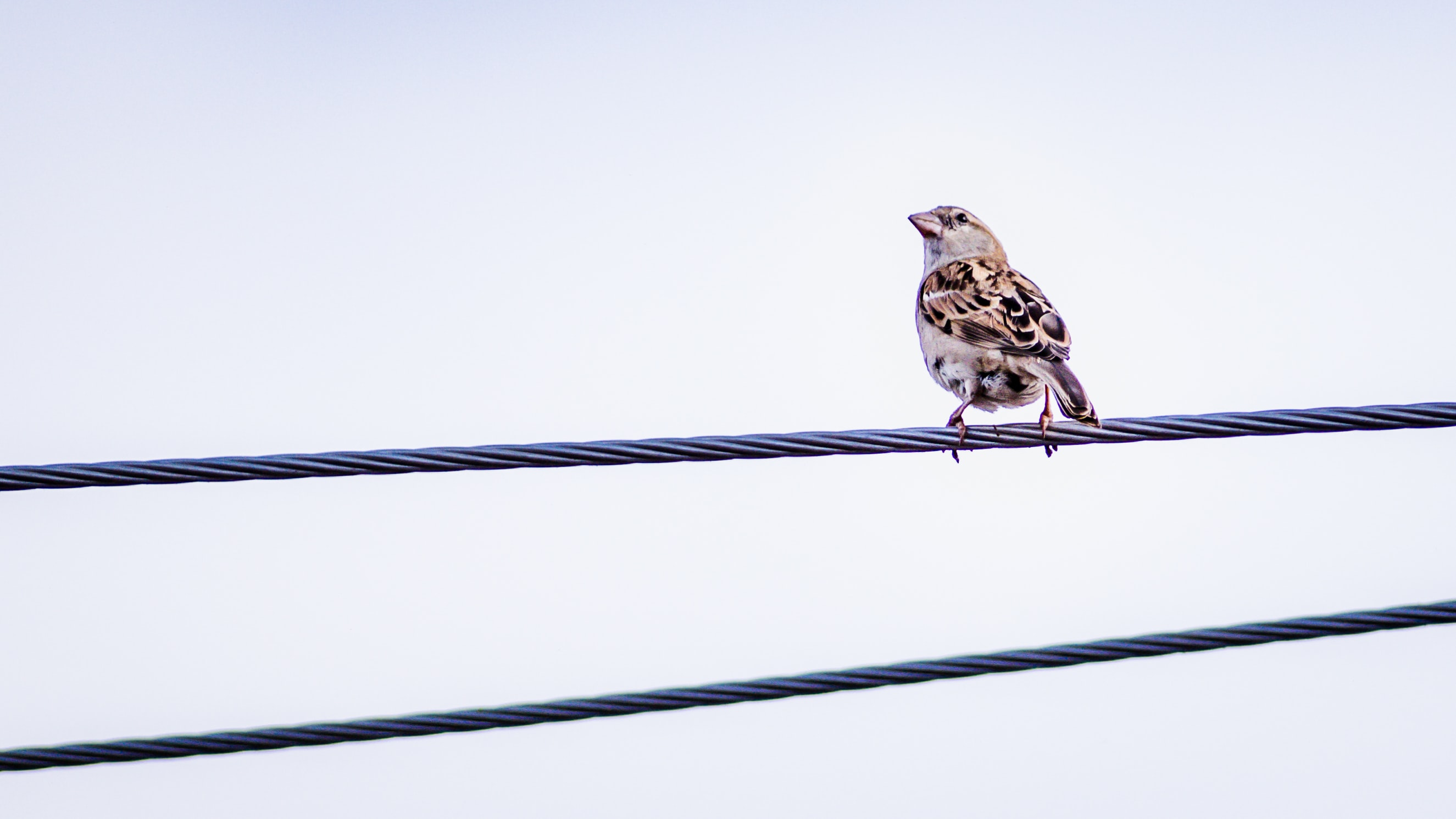 brown bird on steel rope