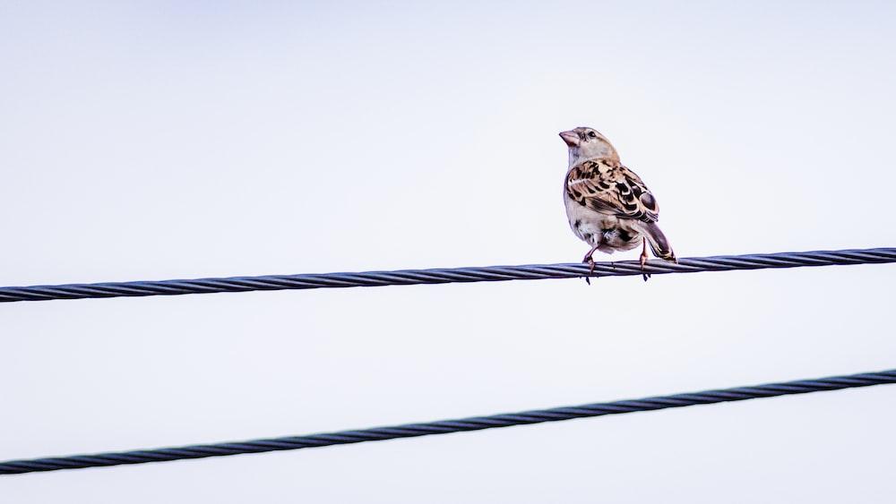 brown bird on steel rope