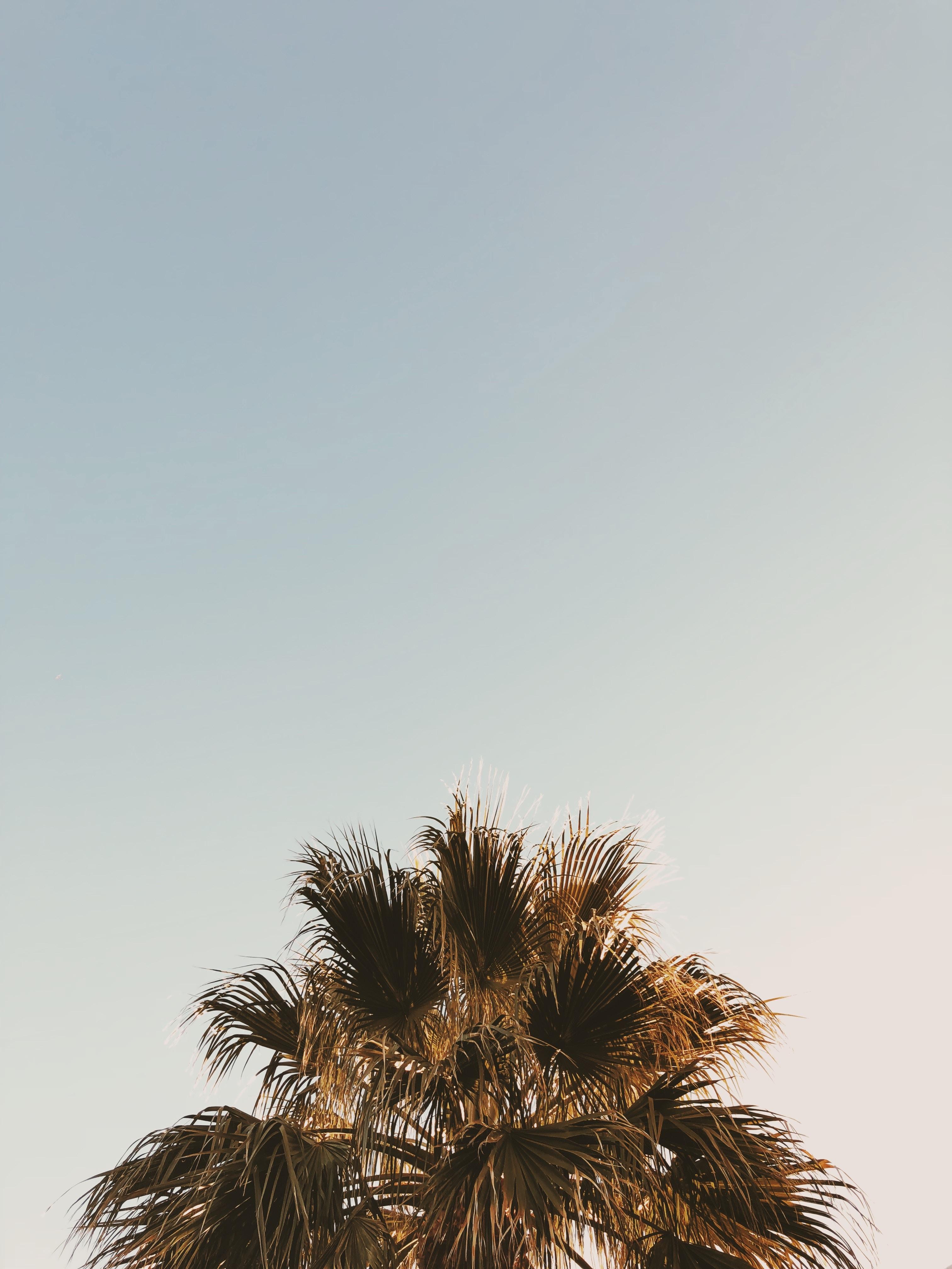 palm tree at daytime