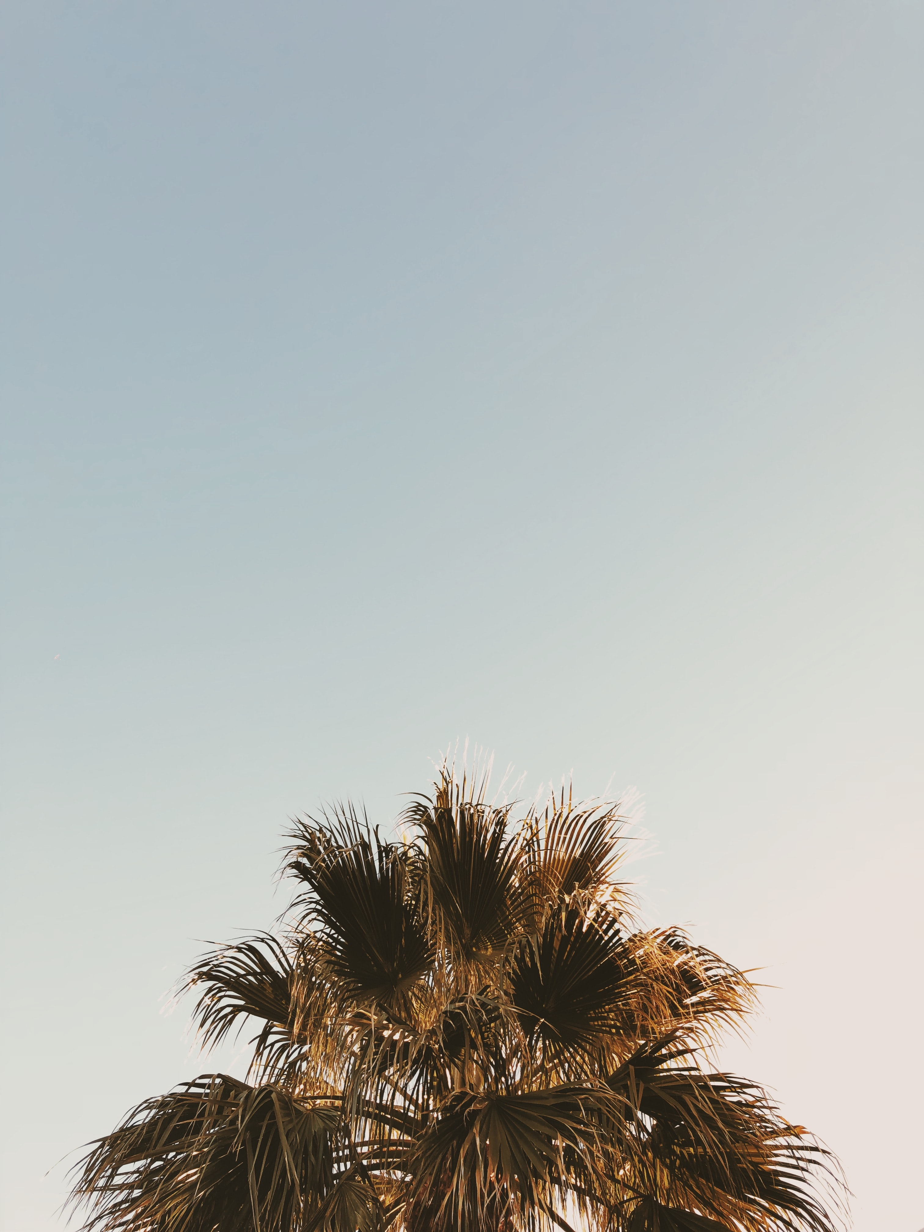 palm tree at daytime