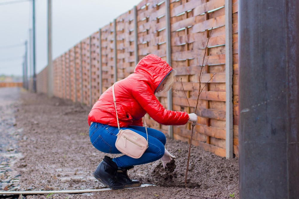 woman wearing red coat planting plant on mud