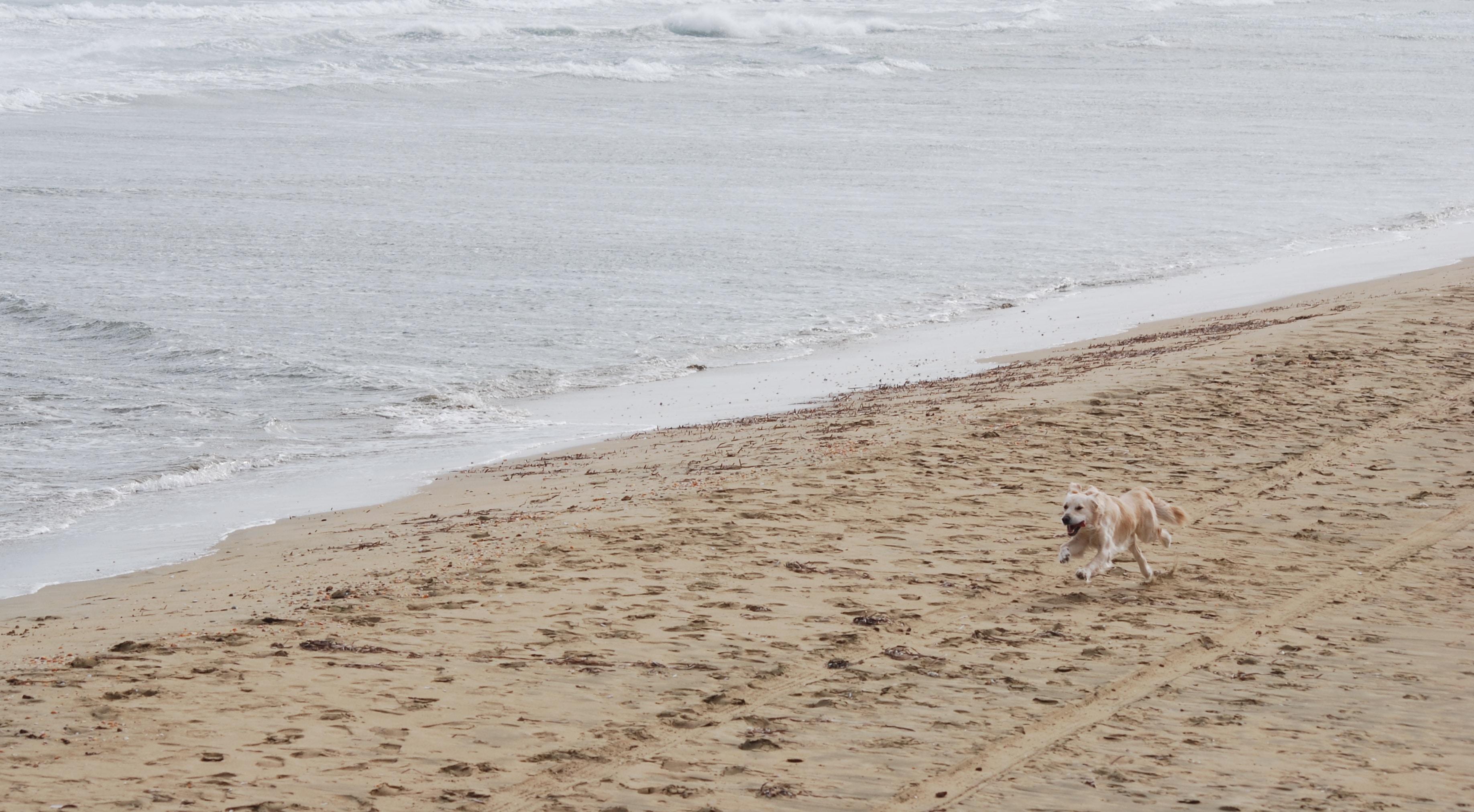 dog running near shoree