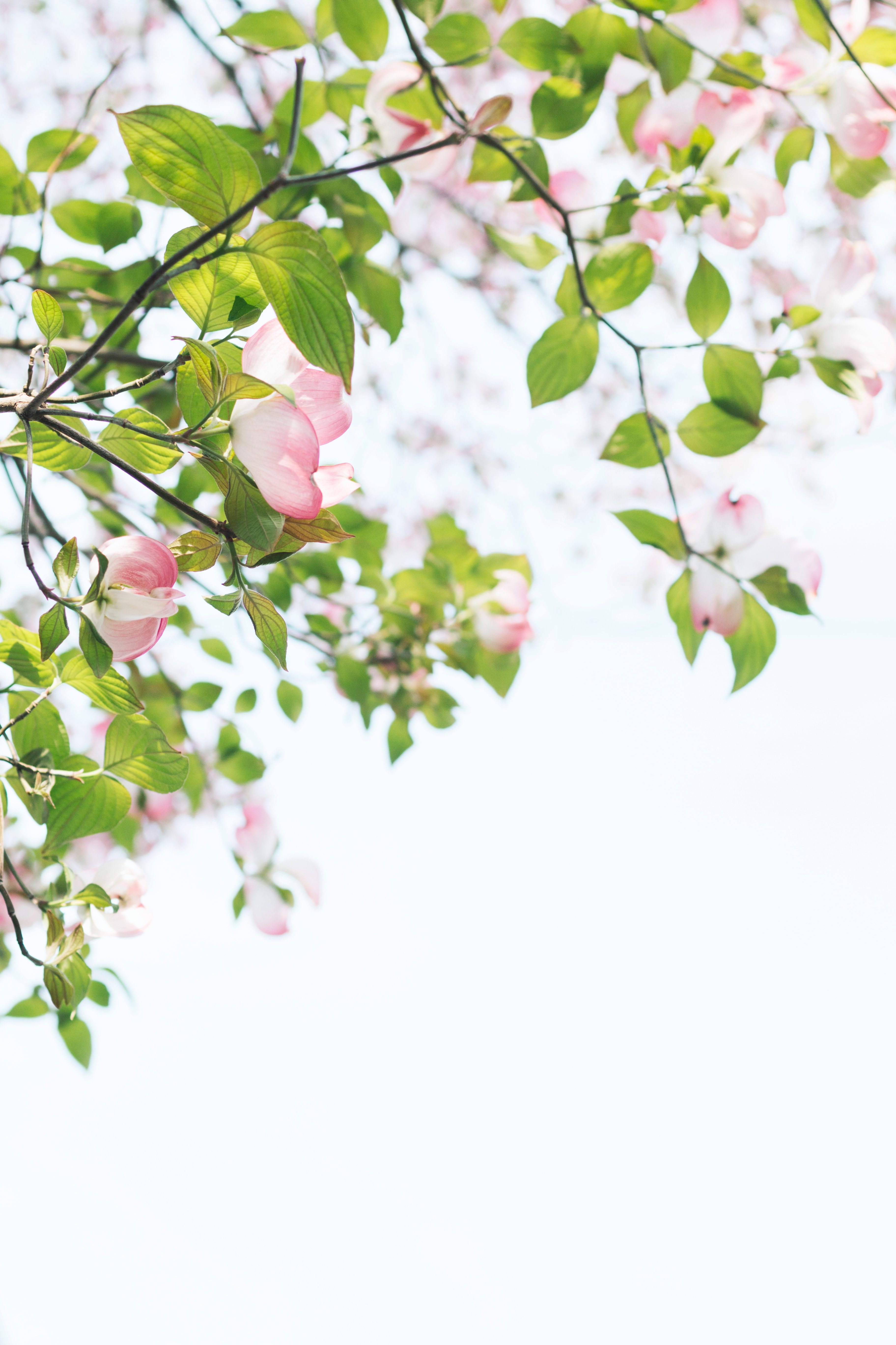 shallow focus photography of tree with pink flowers