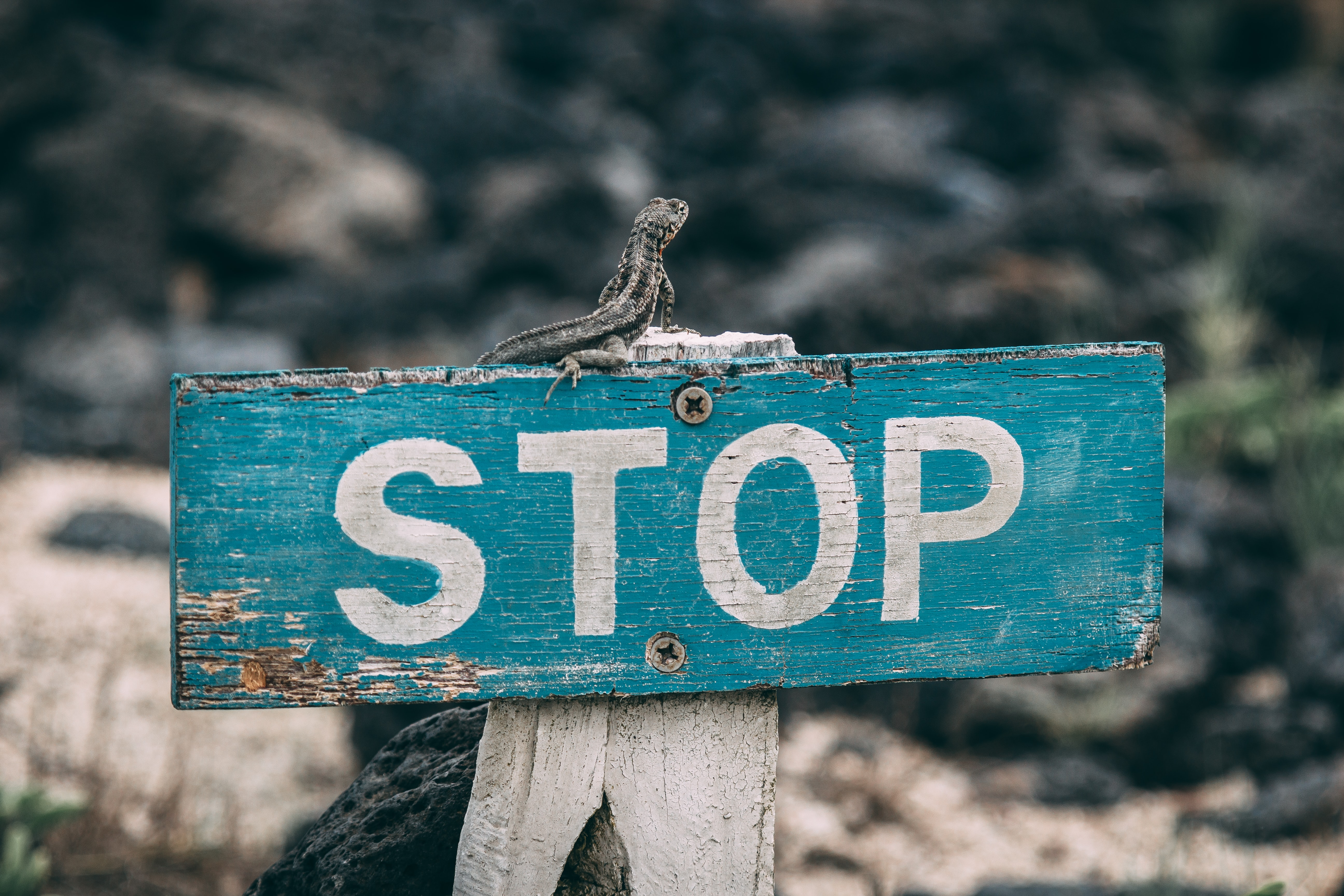 selective focus photography of stop road sign