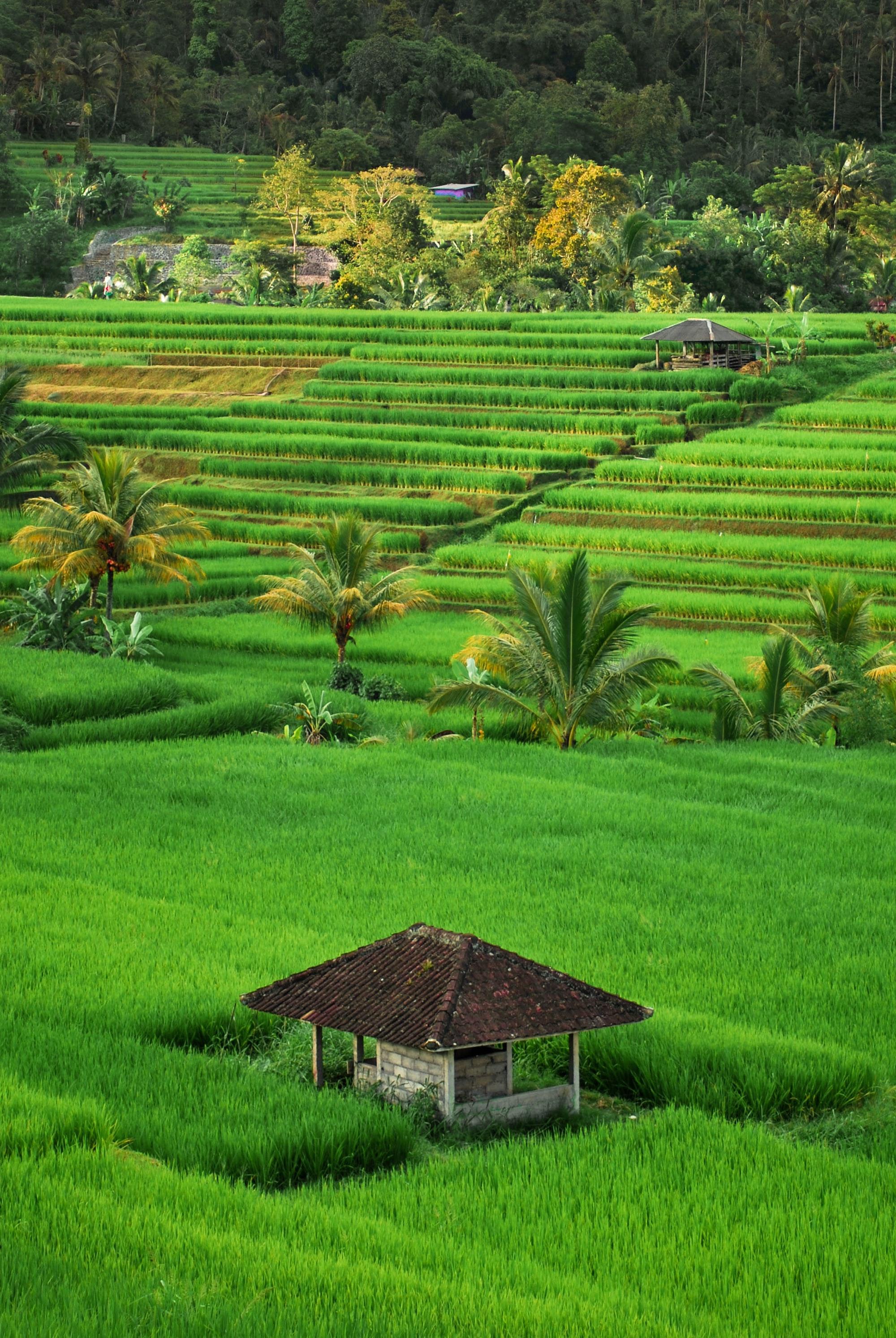 Día de la Independencia de Indonesia. ¿Querés conocerla? Te contamos cómo pagar el viaje.