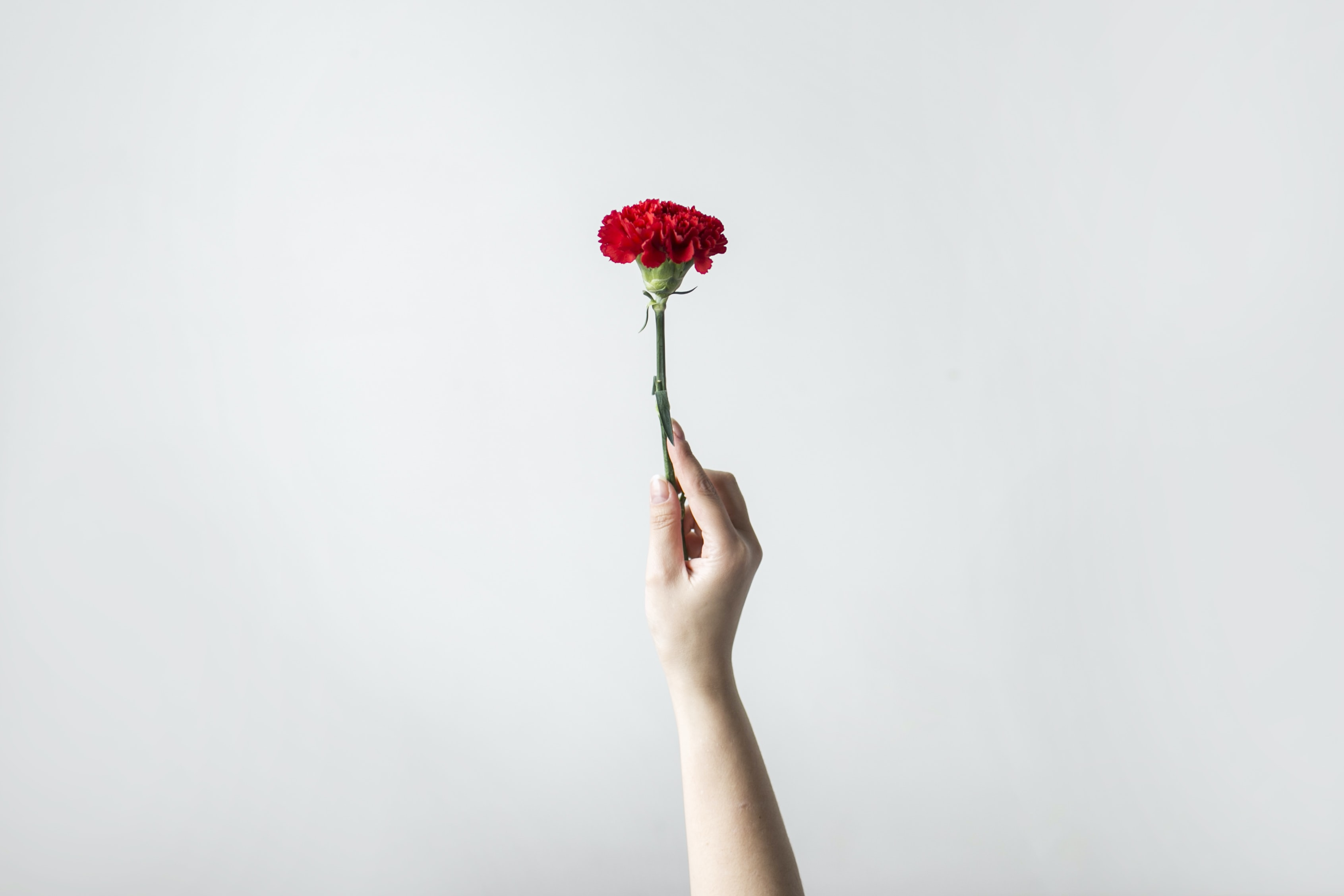 right person's hand holding flower