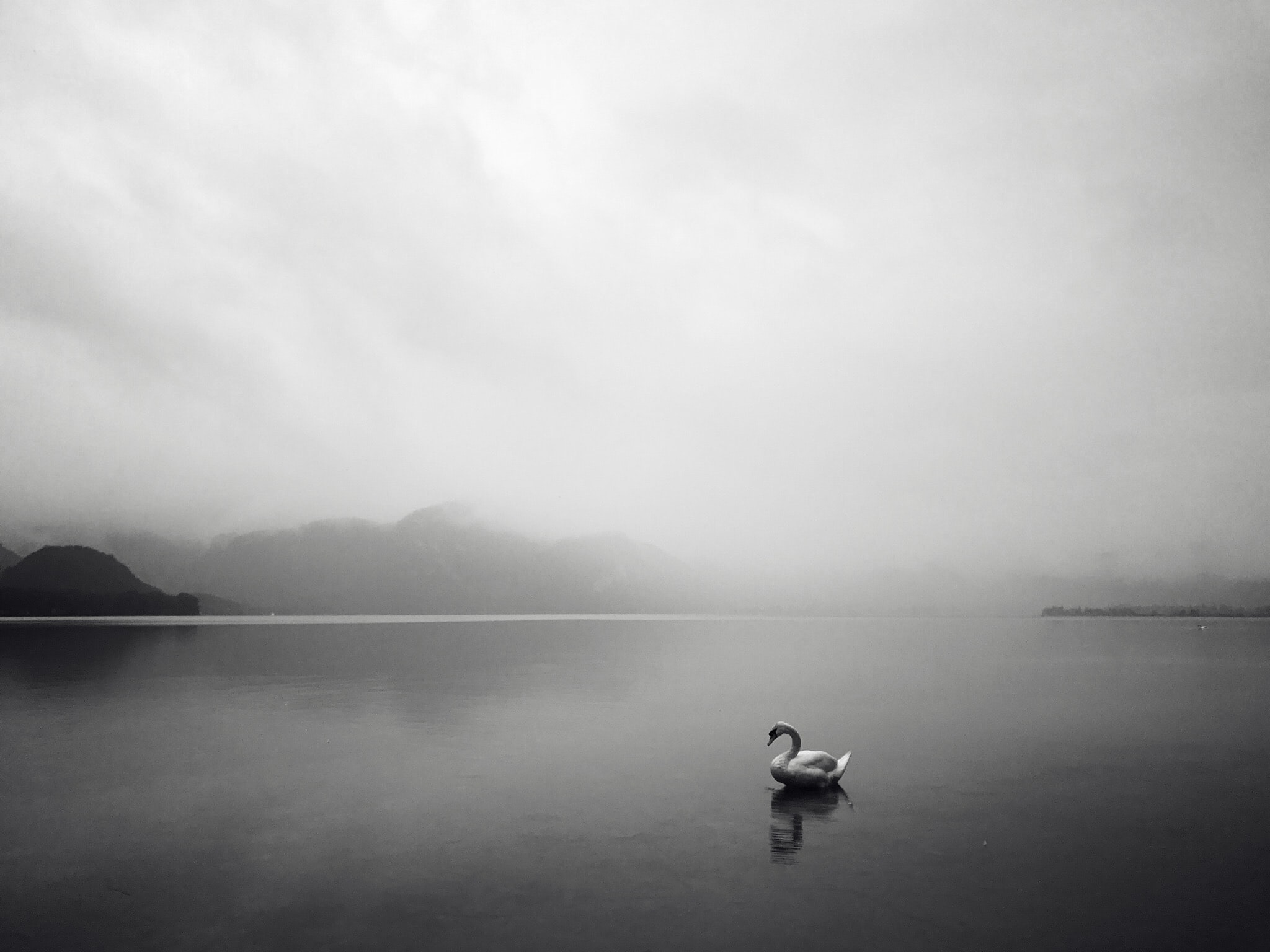 grayscale photo of swan on lake