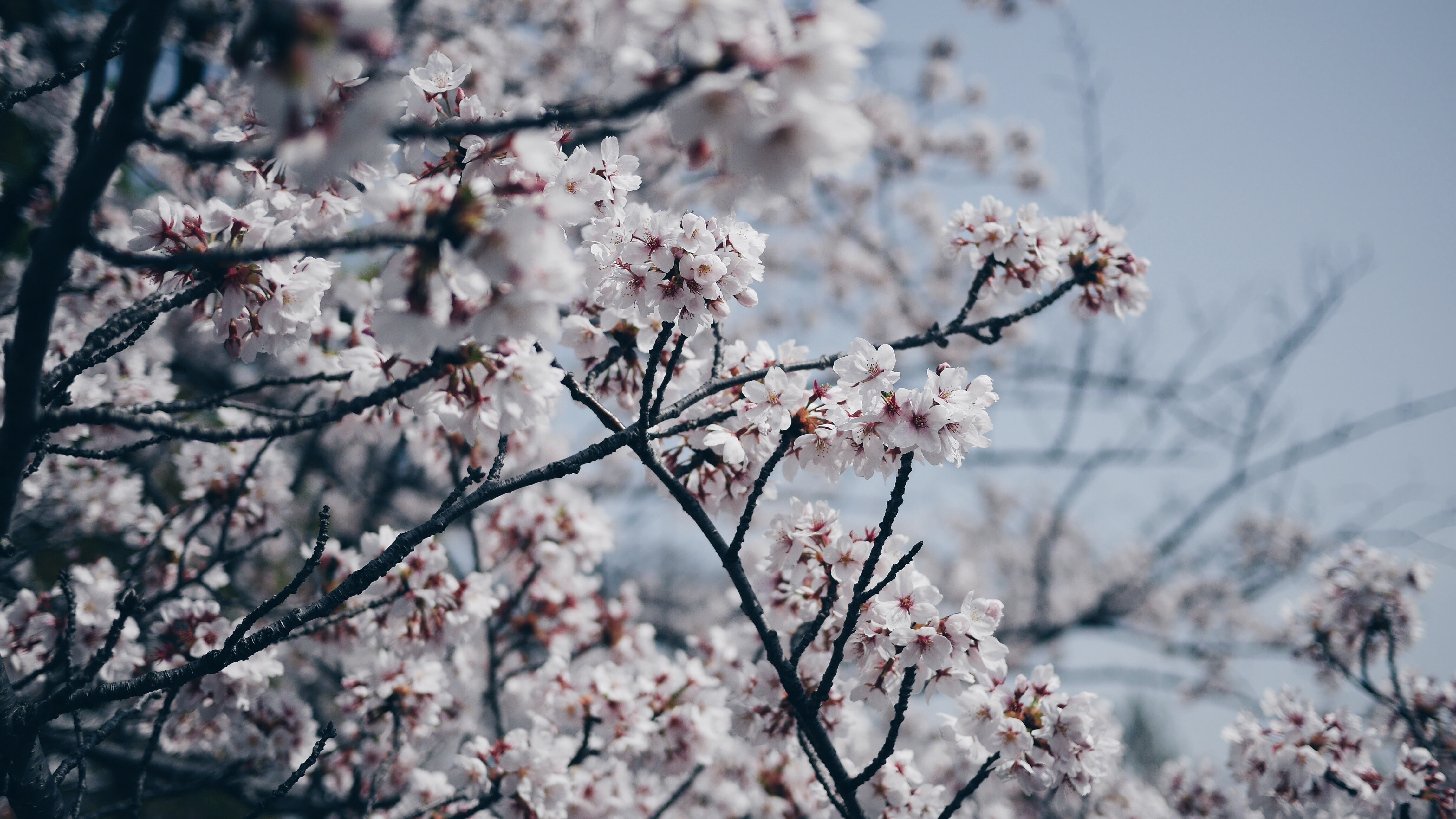 close-up photography of white flowering tree