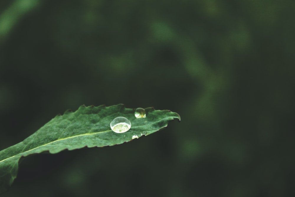 water dew on green leaf