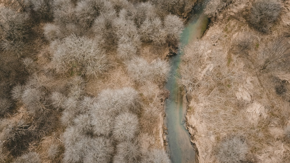 aerial photo of a white leaf trees