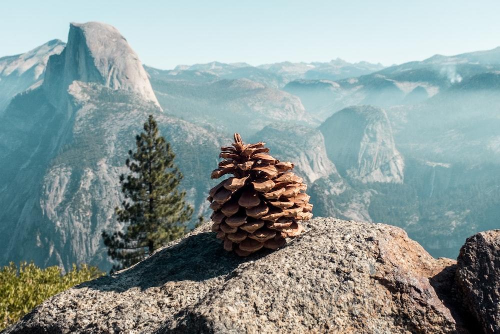acorn on rock background of mountain