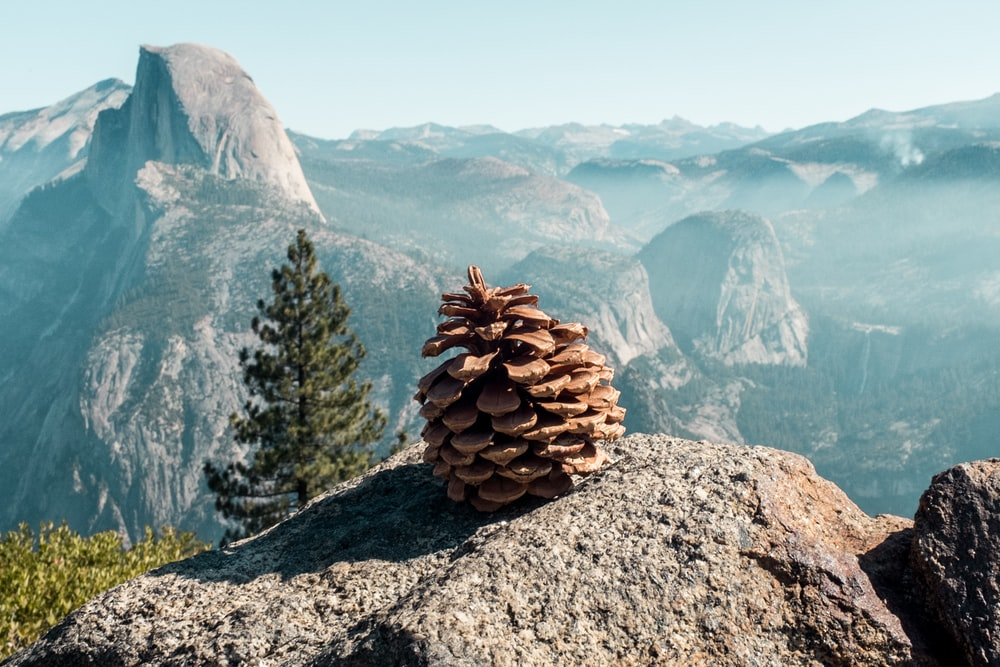 acorn on rock background of mountain