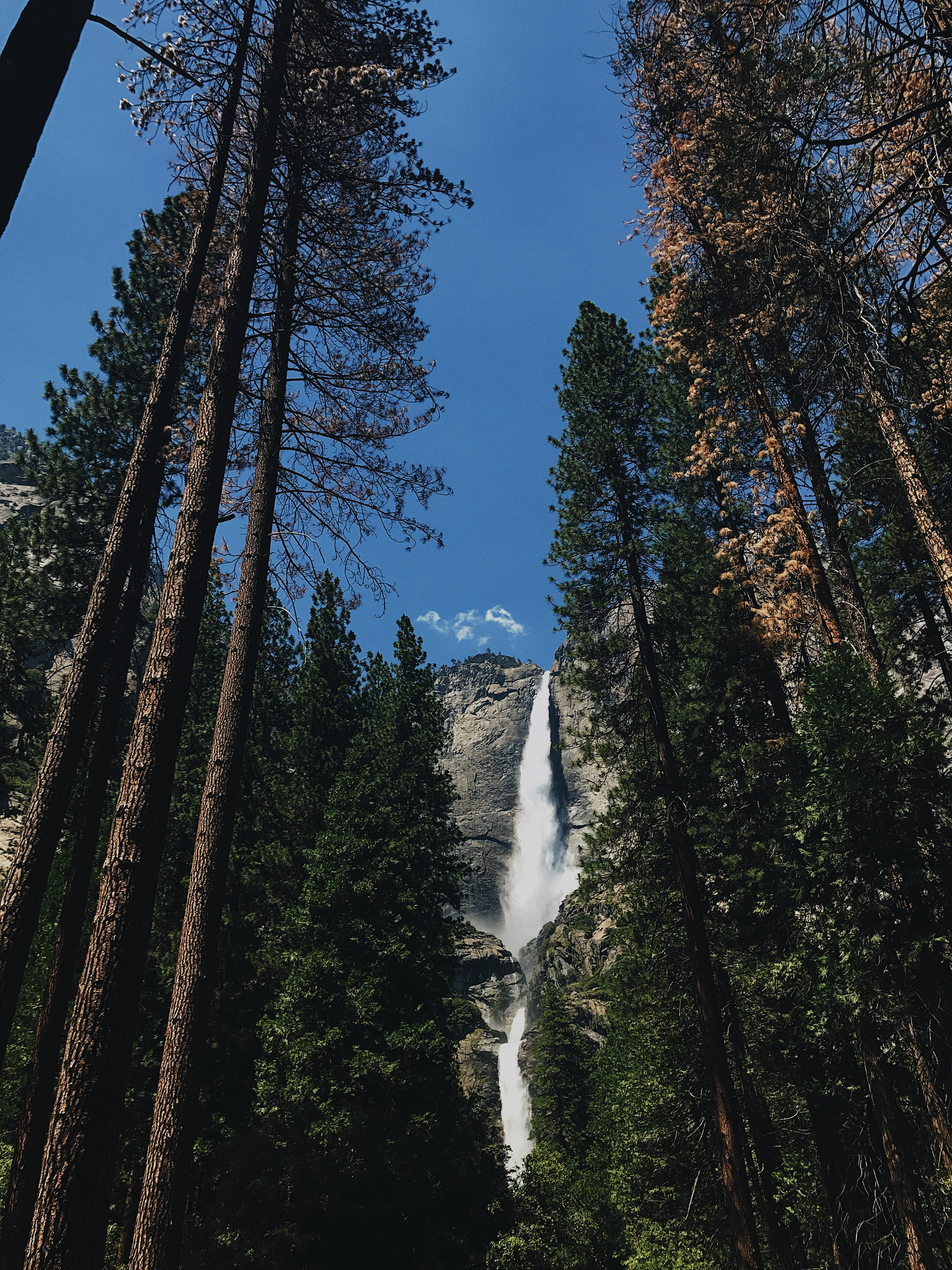 low-angle photography of waterfall and trees