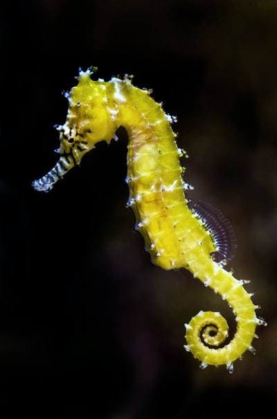 shallow focus photography of green seahorse