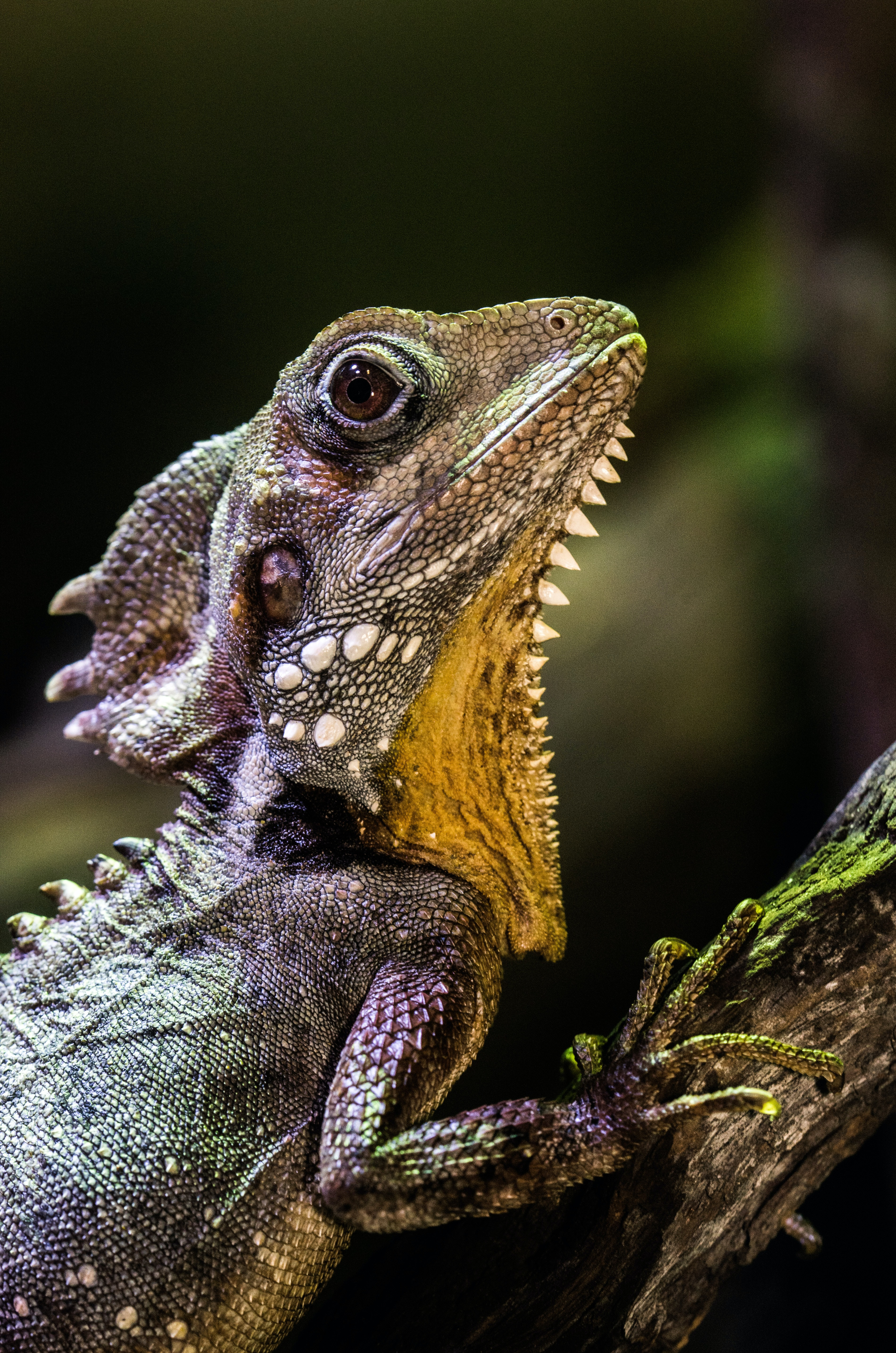 selective focus photography of iguana