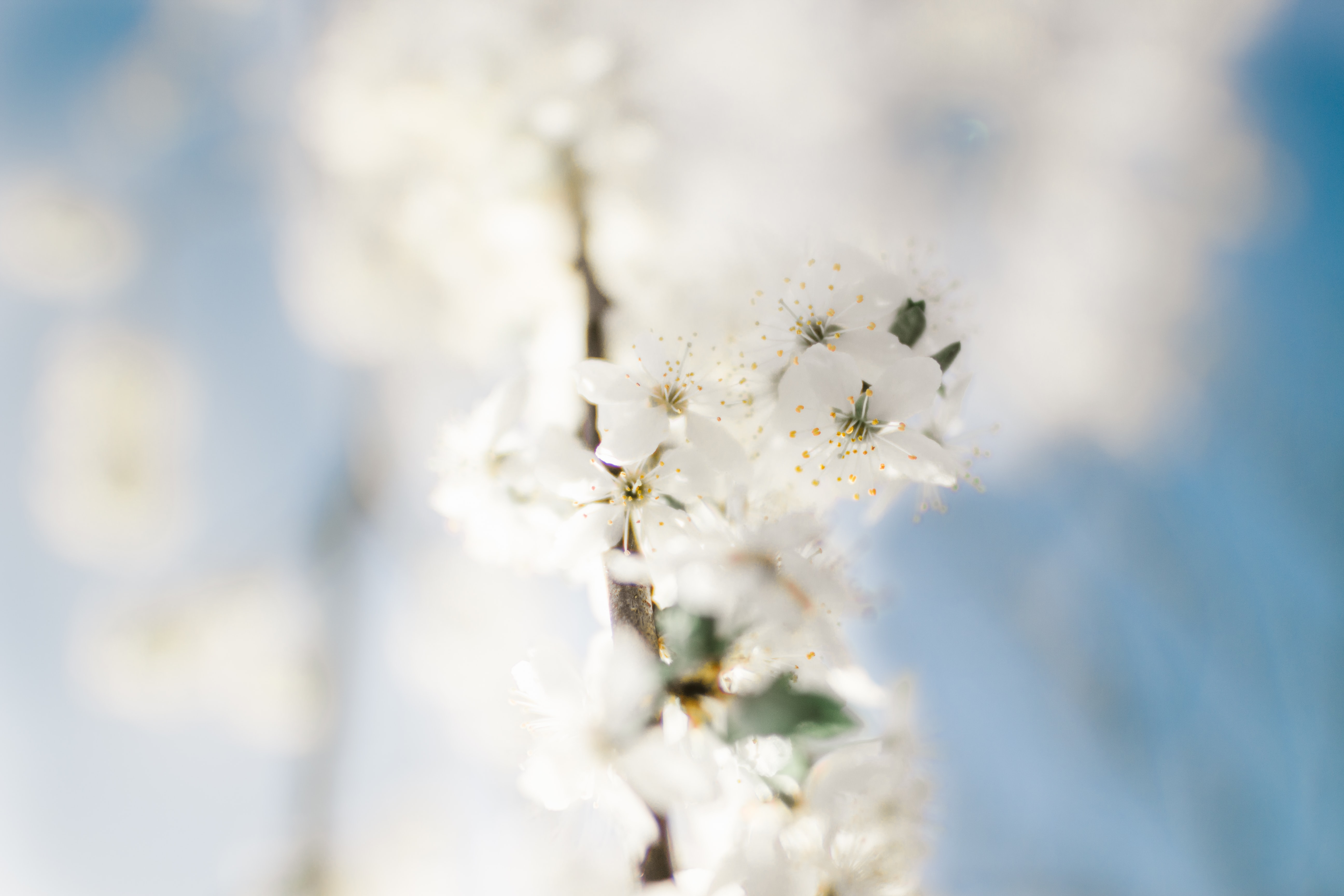selective focus photography white petaled flower