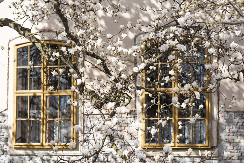 white petaled flower near window during daytime