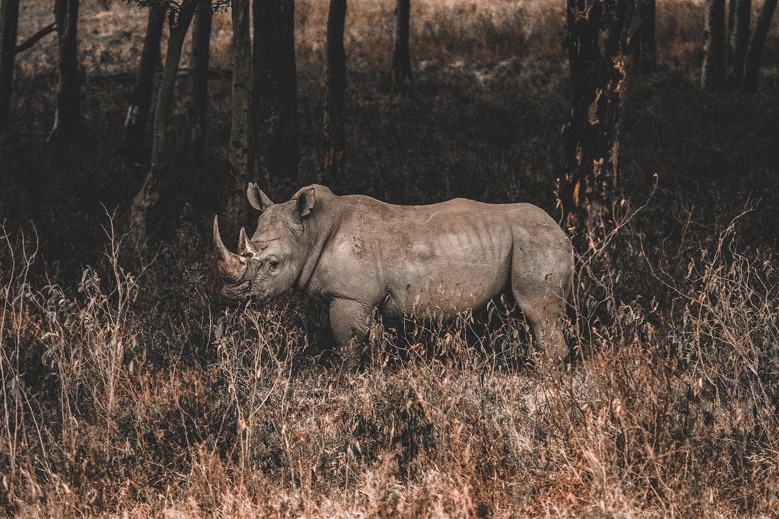 "Nikon D700 sample photo. ""Rhino on forest"" photography"