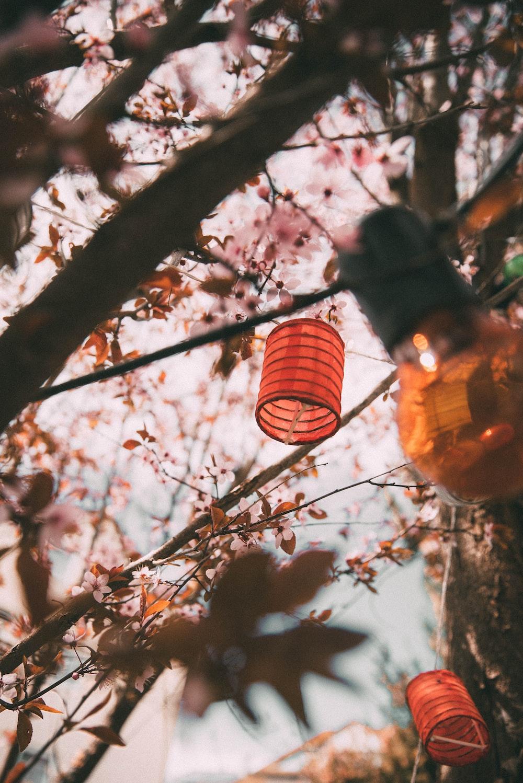 paper lanterns at trees