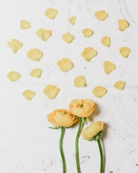 yellow flowers with green stems