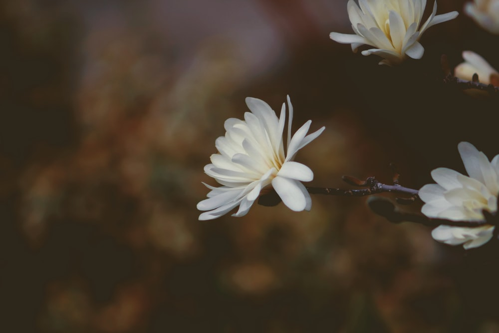 Flower bloom petal and blossom hd photo by majid rangraz white flowers mightylinksfo