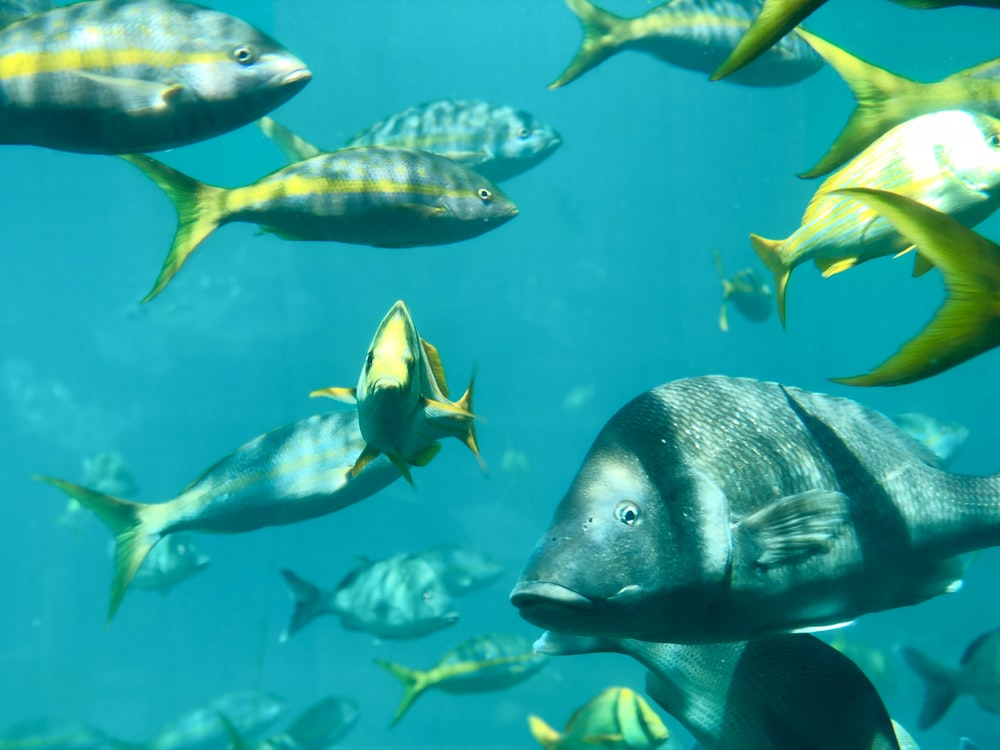 group of fish with sunlight