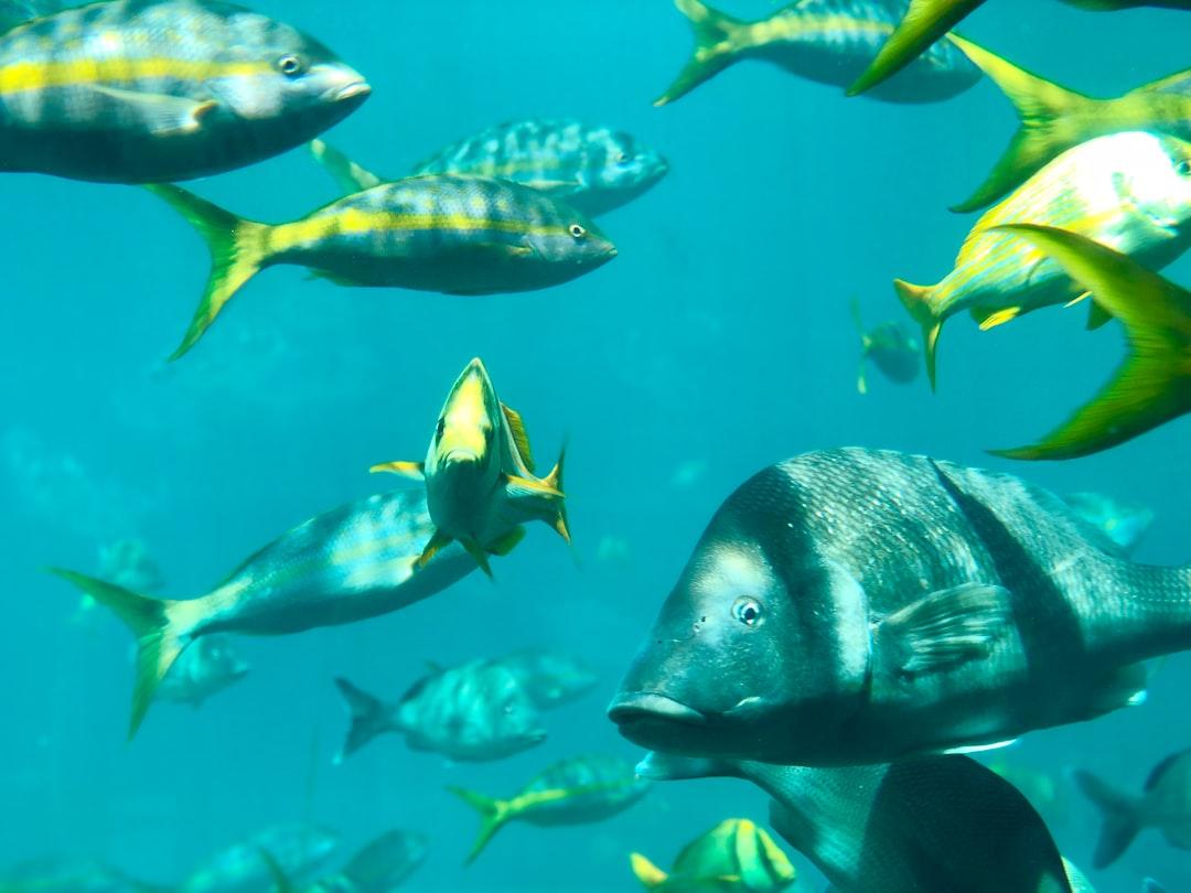 Nassau Atlantis Fish