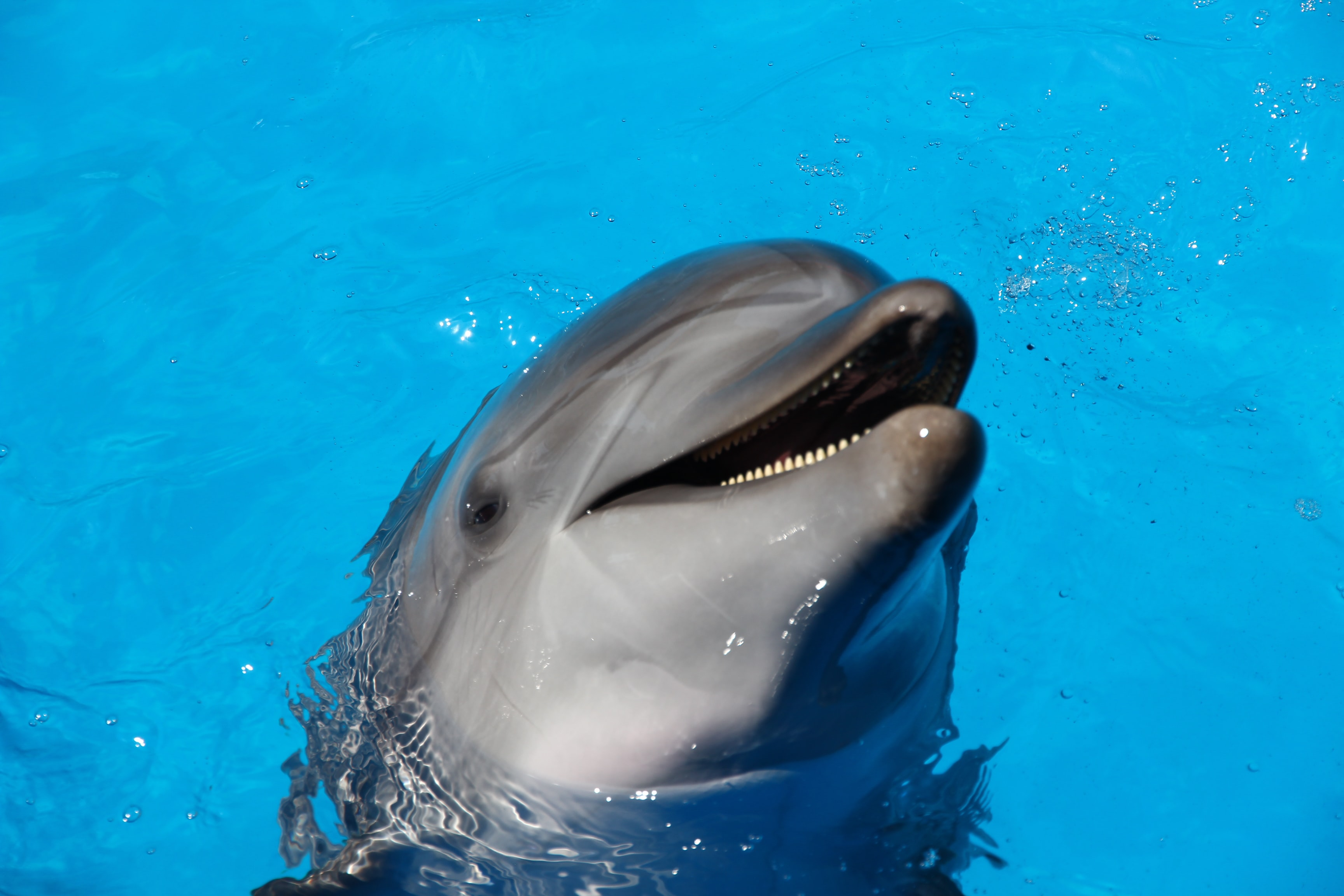 dolphin on water during daytime